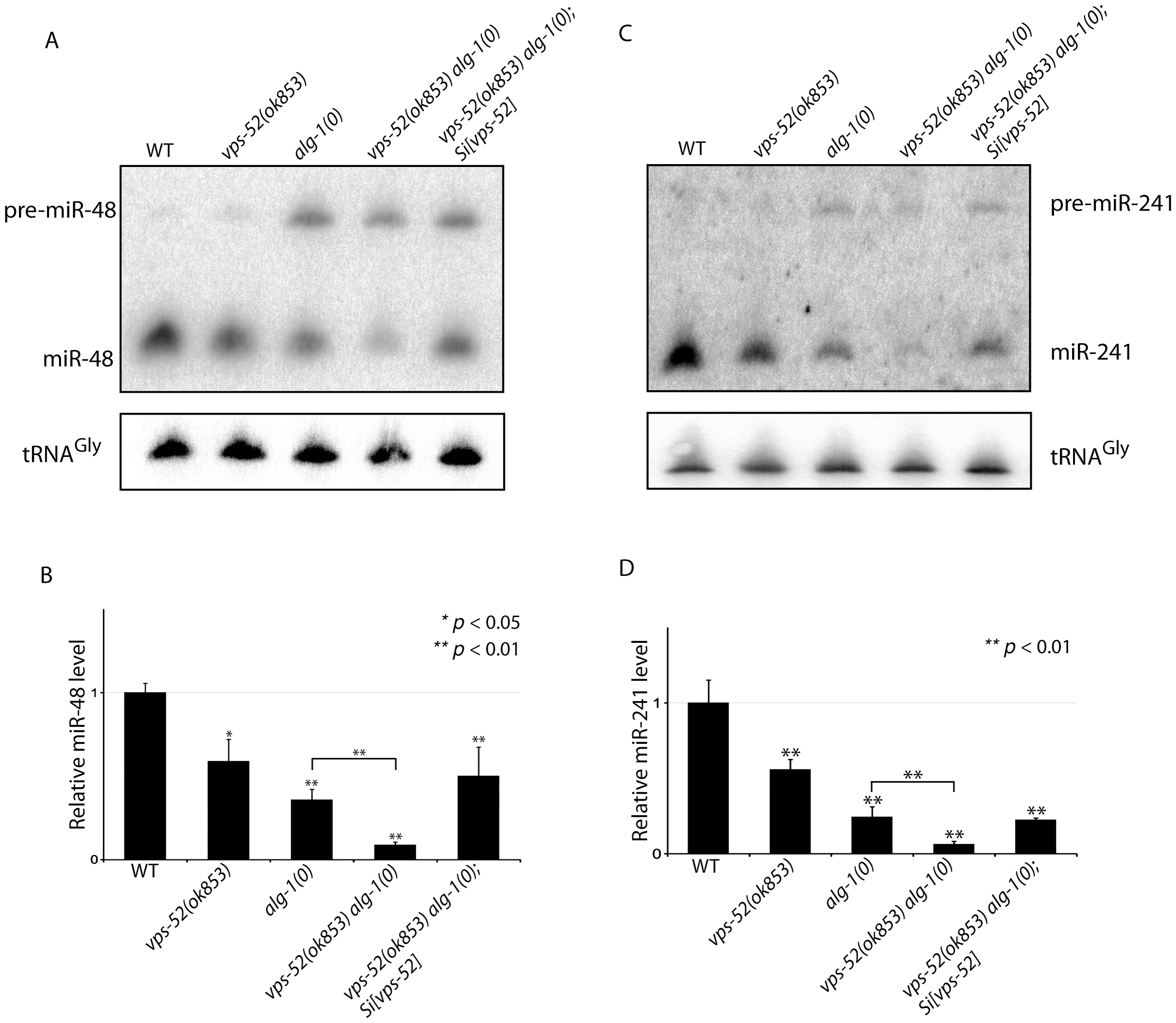 Synergistic effects of <i>vps-52</i> on the abundance of mature <i>let-7</i> family miRNAs.