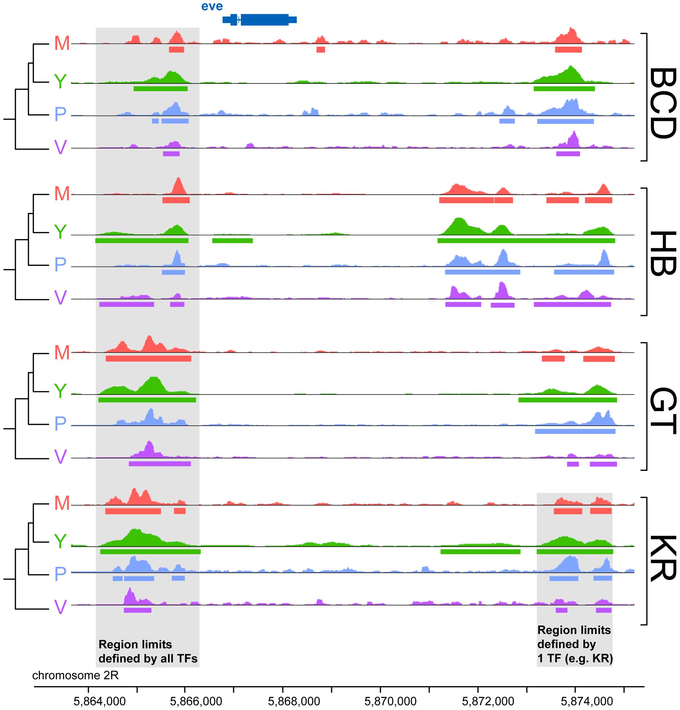 Comparison of binding profiles of BCD, GT, HB and KR at the <i>even-skipped</i> locus in the four species <i>D.melanogaster</i>, <i>D.yakuba</i>, <i>D.pseudoobscura</i> and <i>D.virilis</i>.