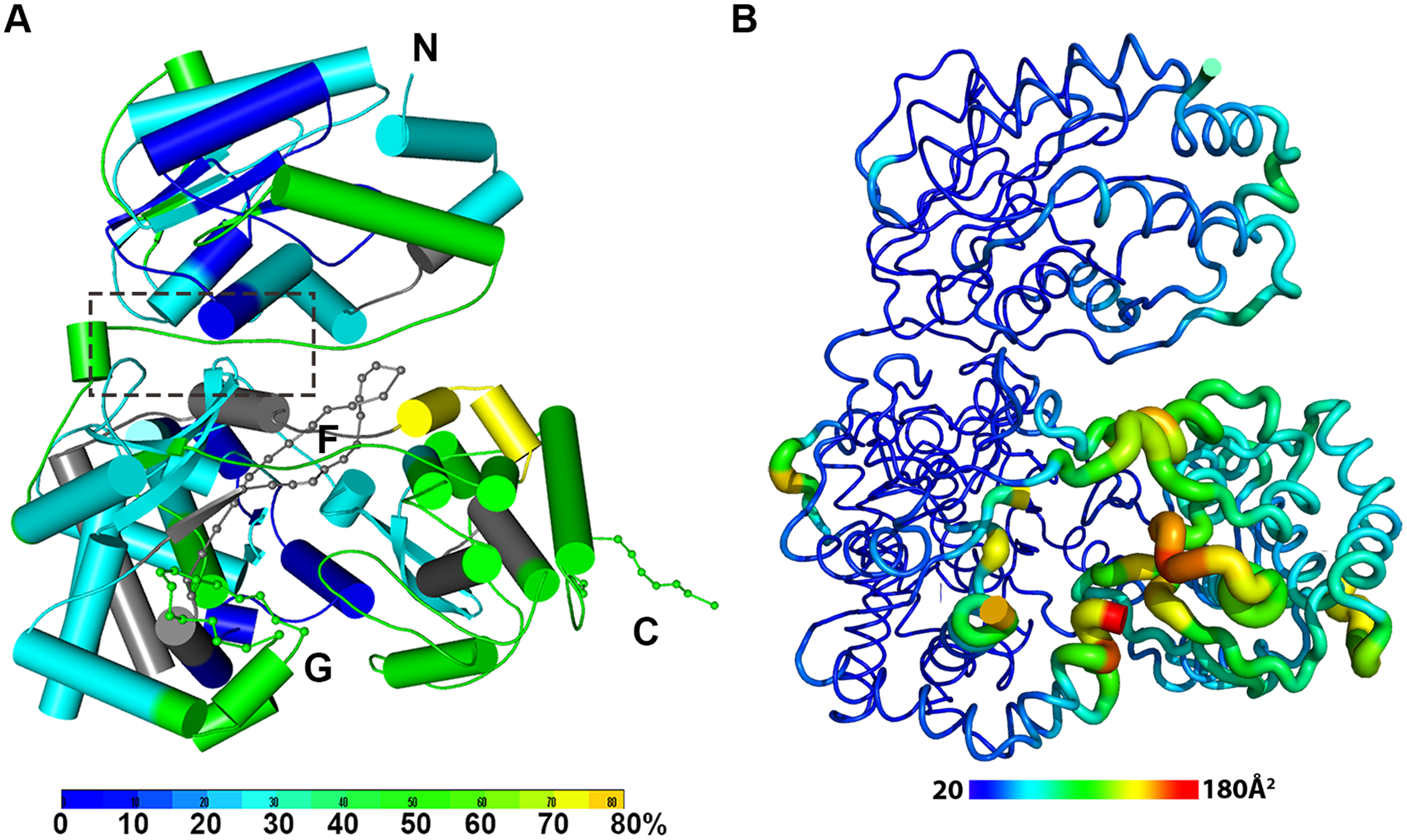 The dynamics of NS5 in solution probed by HDX-MS.