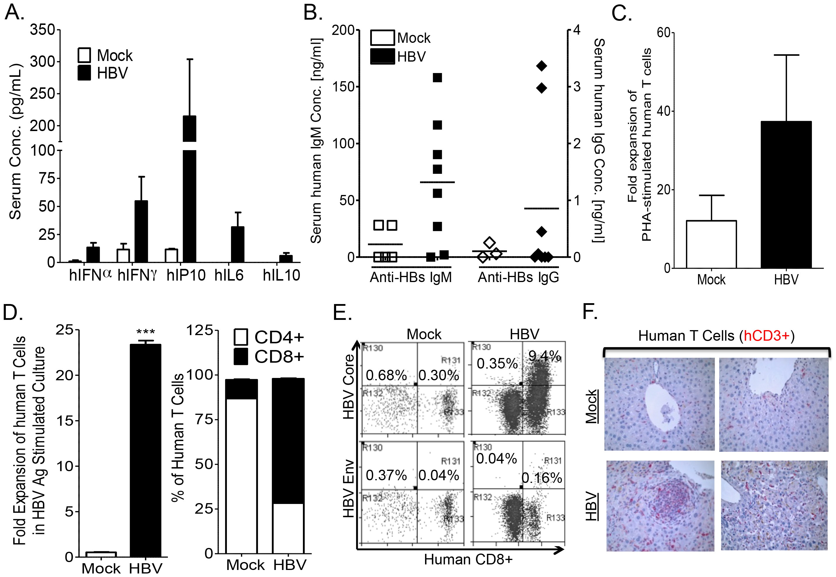 HBV infection induces anti-HBV human immune response in A2/NSG/Fas-hu mice.