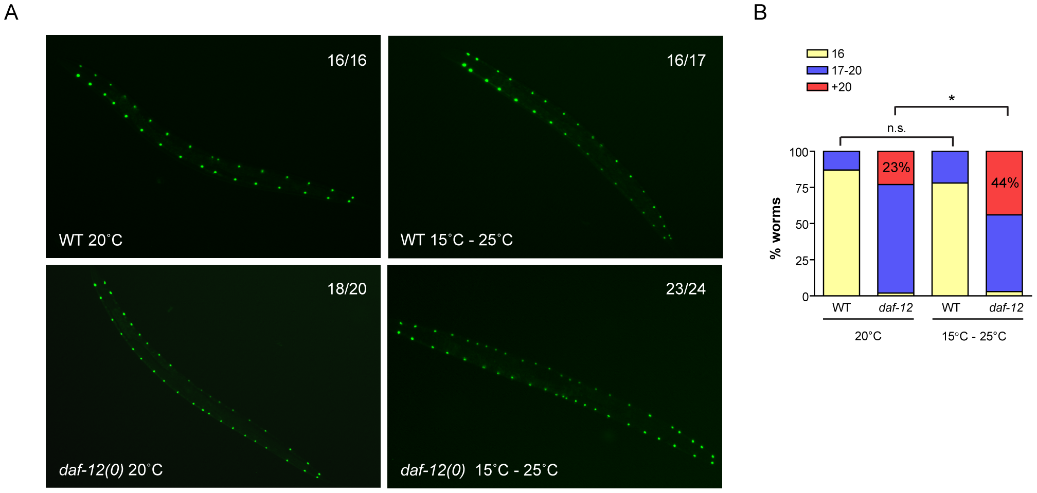 DAF-12 acts as a phenotypic capacitor in worms.