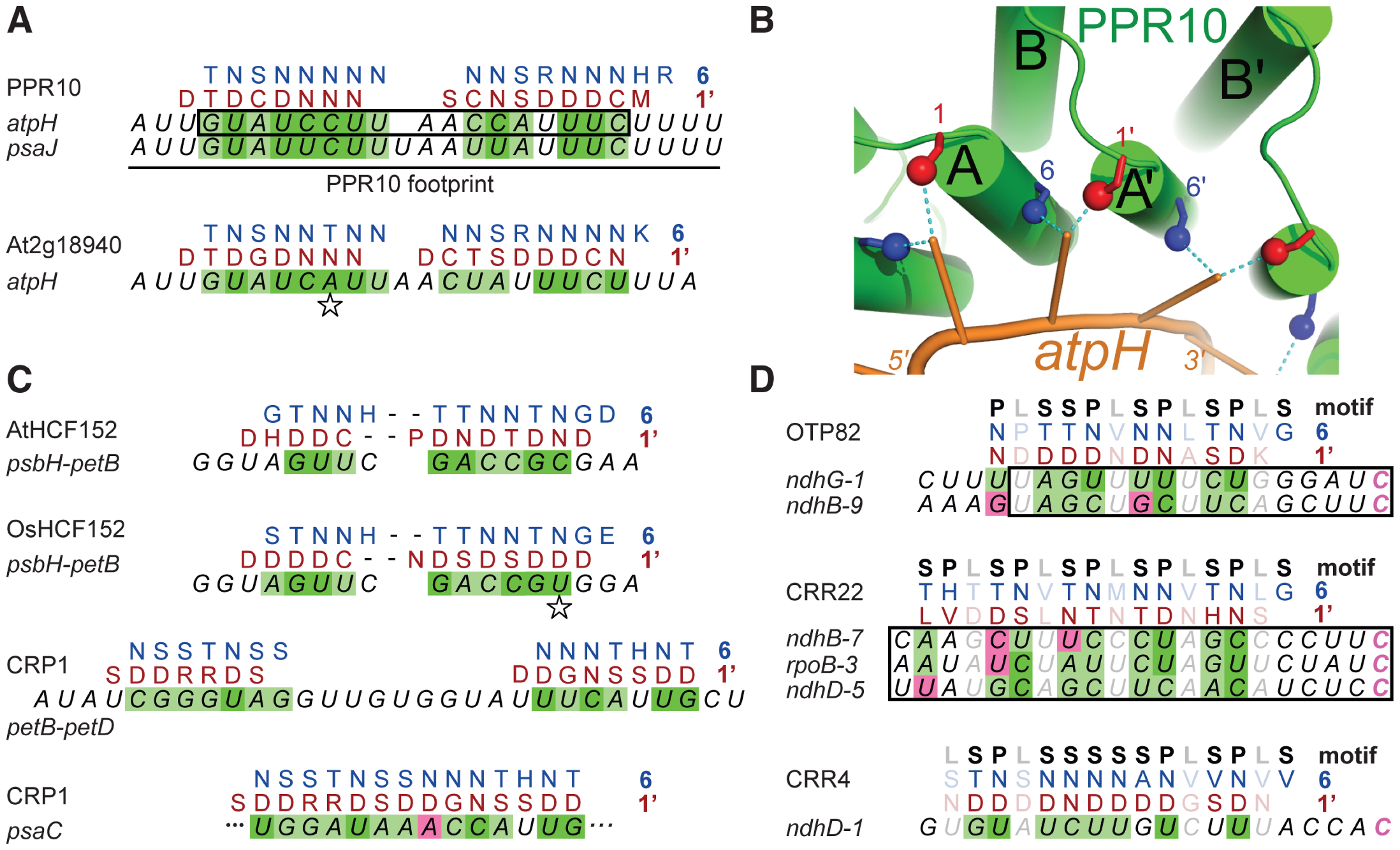 Alignments between PPR Proteins and Cognate Binding Sites.