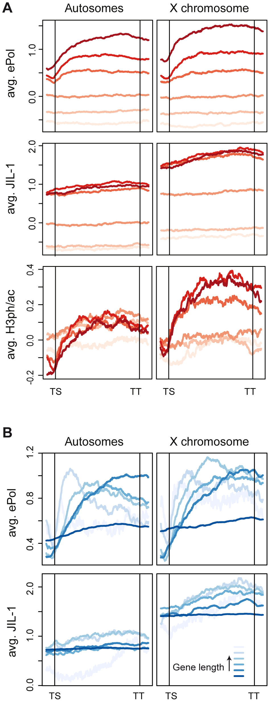 JIL-1 distributes differently than elongating polymerase on active chromatin.