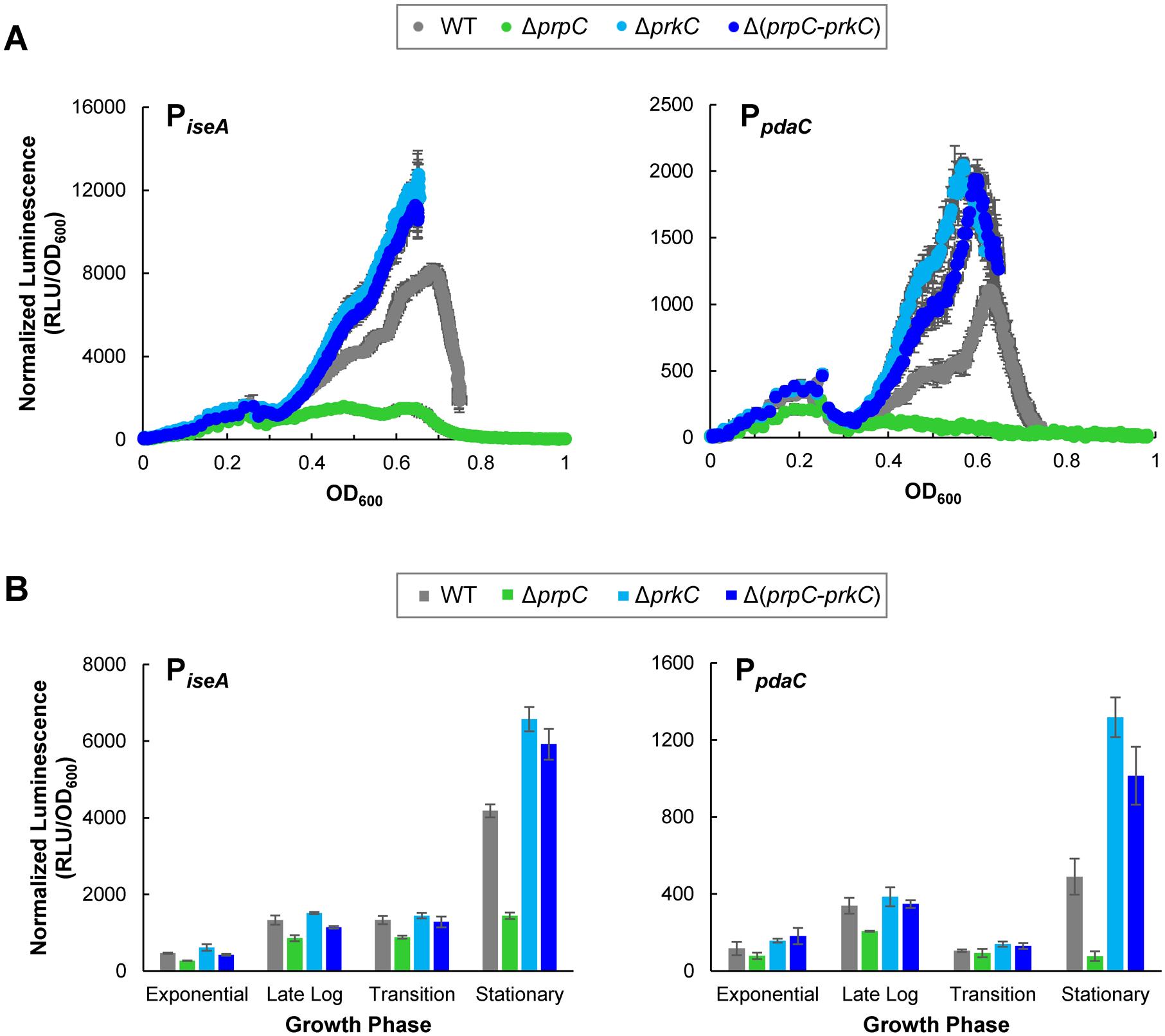 The PrkC kinase and the PrpC phosphatase regulate the WalR regulon genes <i>iseA</i> and <i>pdaC</i>.