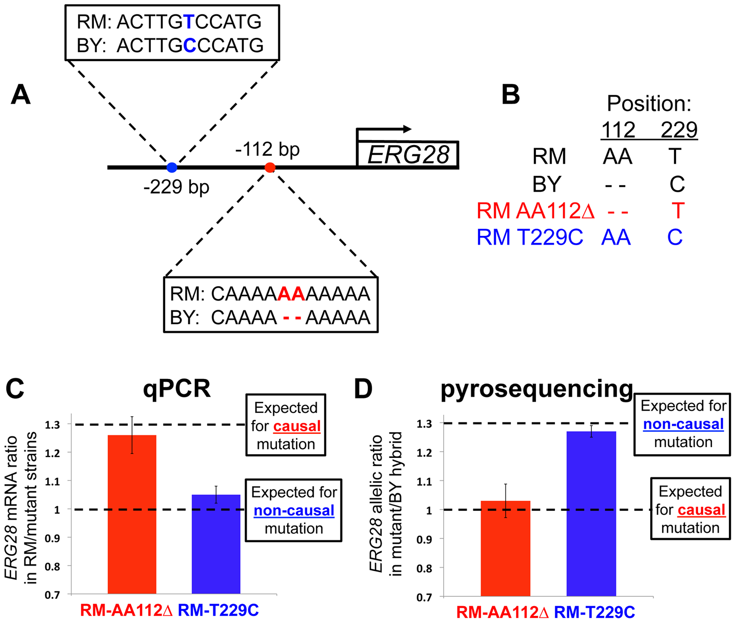 Pinpointing the causal mutation affecting <i>ERG28 cis</i>-regulation.
