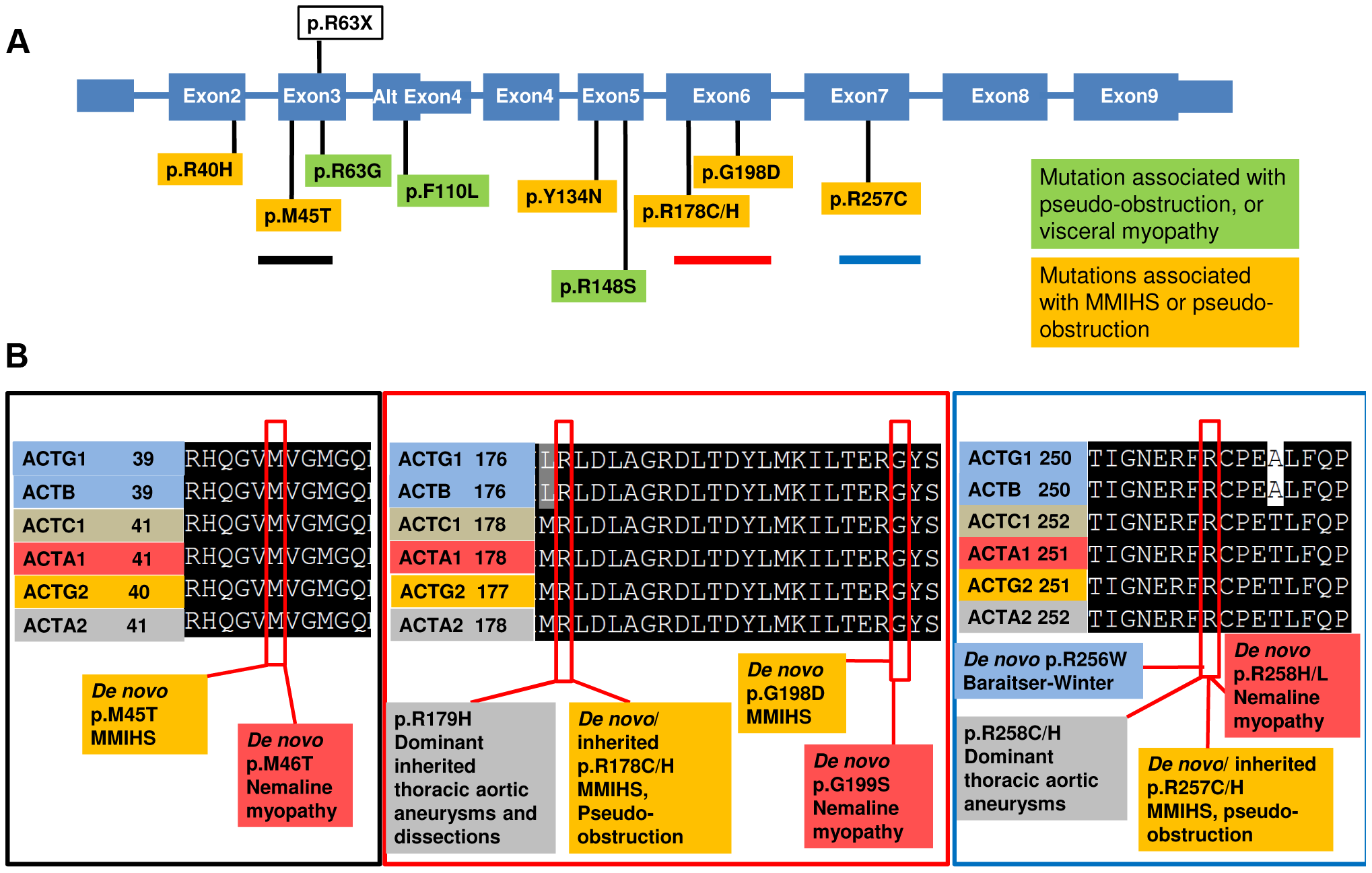 <i>ACTG2</i> mutations affect conserved residues that are also targets for Mendelian disease.
