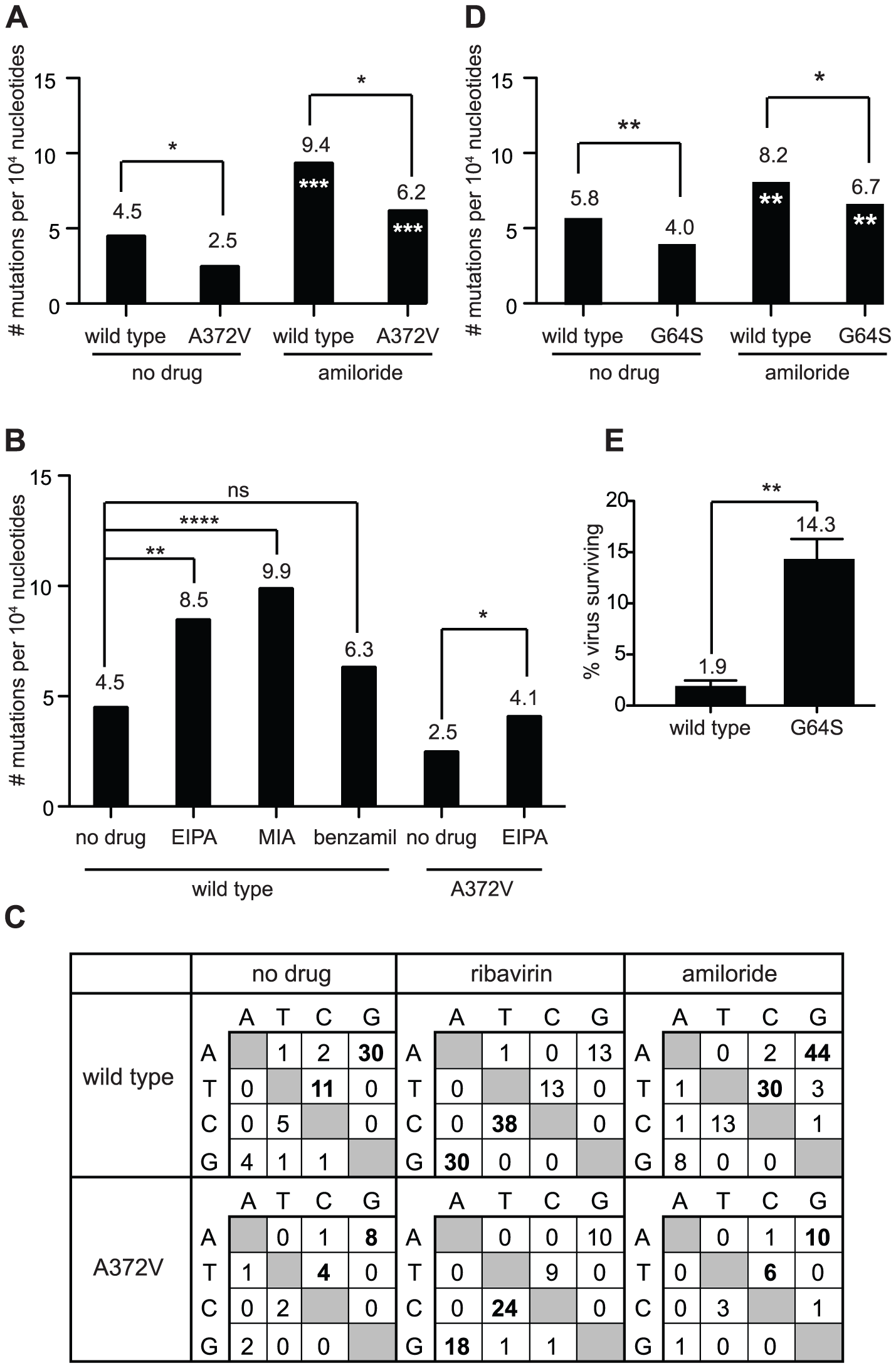 Amiloride has RNA mutagenic activity to which high fidelity RdRp variants of picornaviruses resist.
