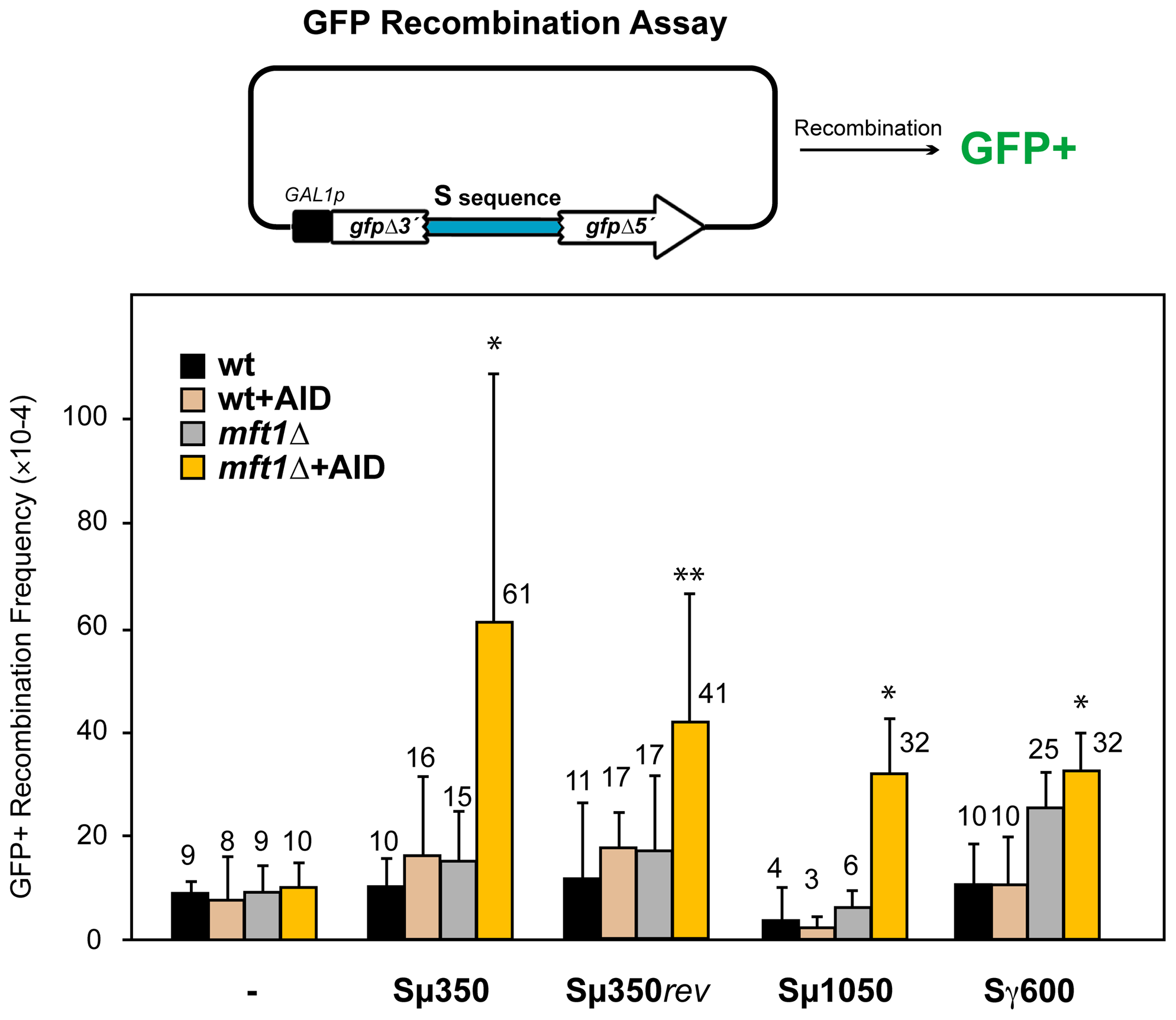 AID–induced recombinogenic effect of different murine S sequences in wild-type and THO mutants.