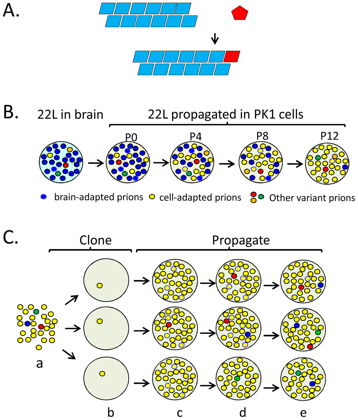 Propagation, mutation, and selection of prions in cultured cells.