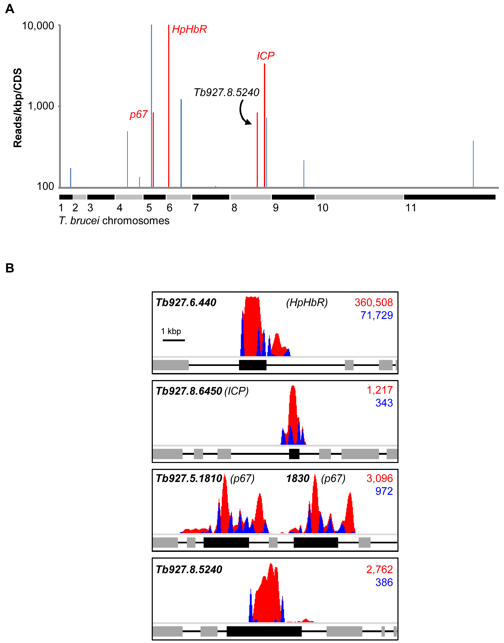 An RNAi screen reveals major determinants of human serum sensitivity in <i>T. b. brucei</i>.