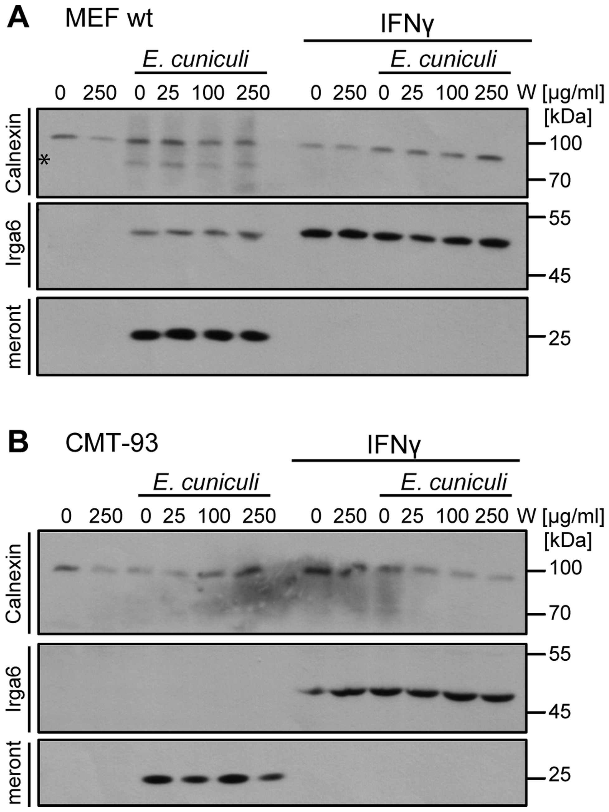 Tryptophan supplementation cannot reverse the IFNγ-mediated <i>E. cuniculi</i> restriction.