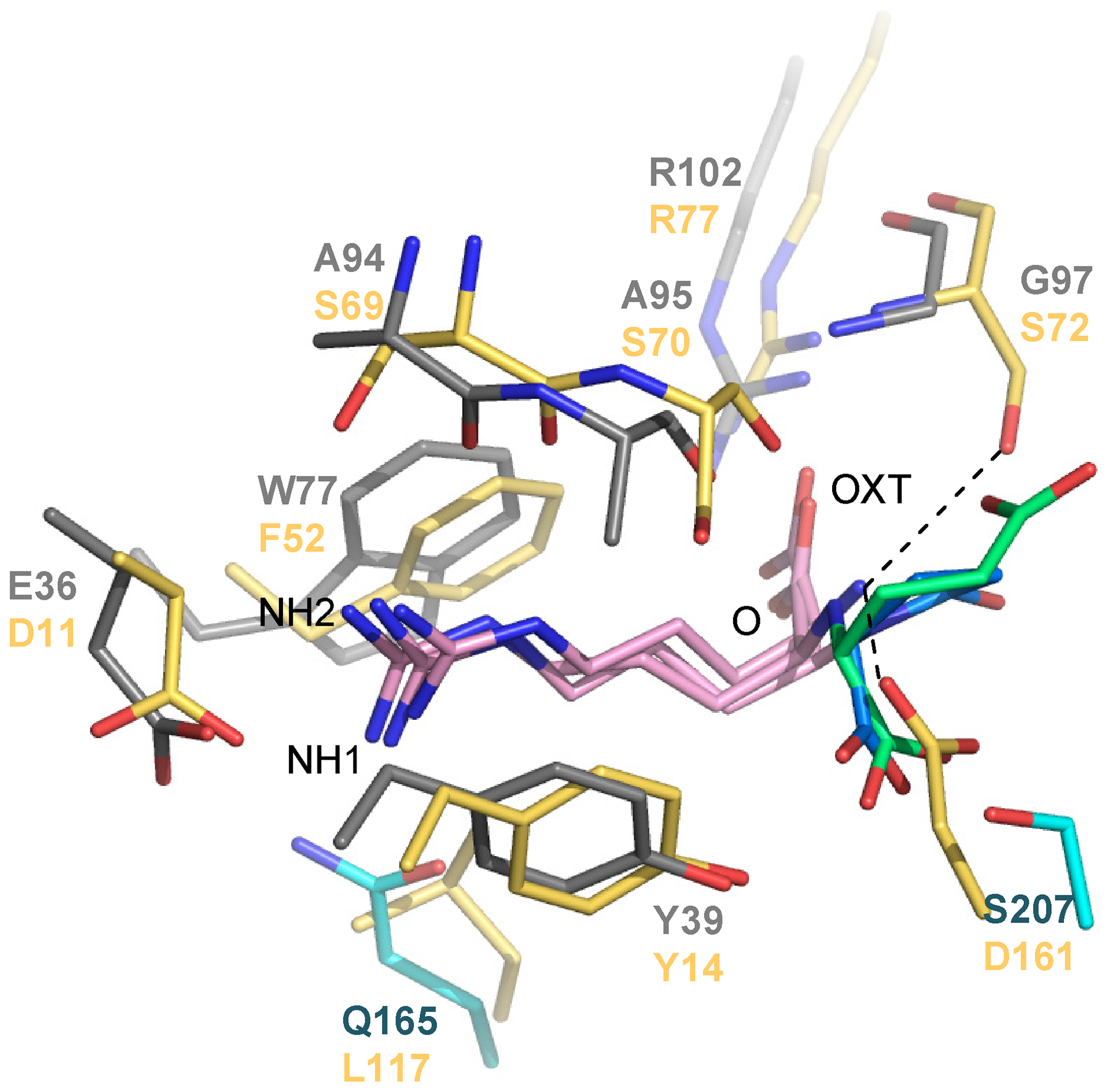 Structural comparison between the binding sites of NocT (shown in color domains as in <em class=&quot;ref&quot;><b>Figure 1</b></em>) in complex with nopaline and pyronopaline and the <i>Salmonella</i> PBP LAO in complex with arginine (PDB code 1LAF; in yellow).