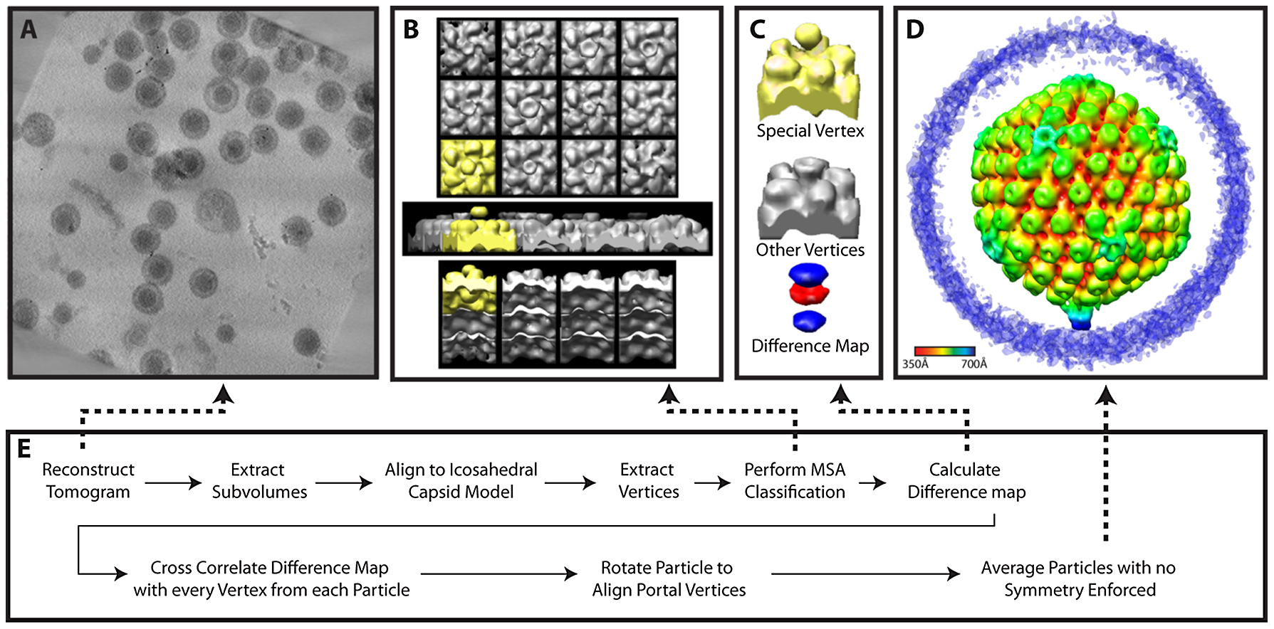 Workflow for MSA-guided classification.