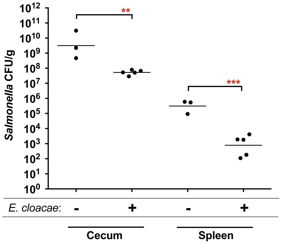 Protection of mice against <i>Salmonella</i> serovar Typhimurium strain 14028 by <i>Enterobacter cloacae</i> strain JLD400.