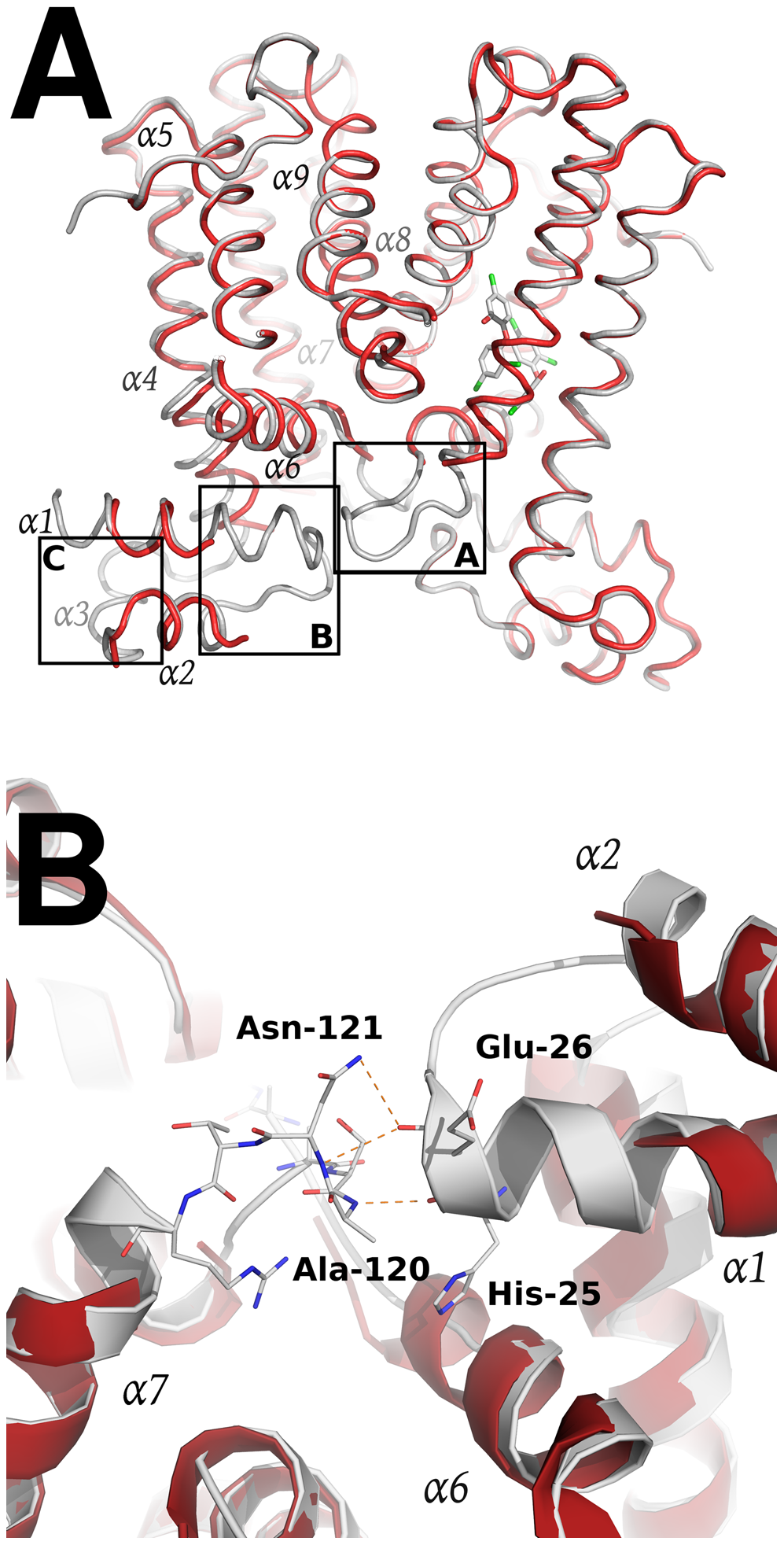 Structural comparison between the apo SmeT (in red) and the SmeT-Triclosan complex (in grey) structures.