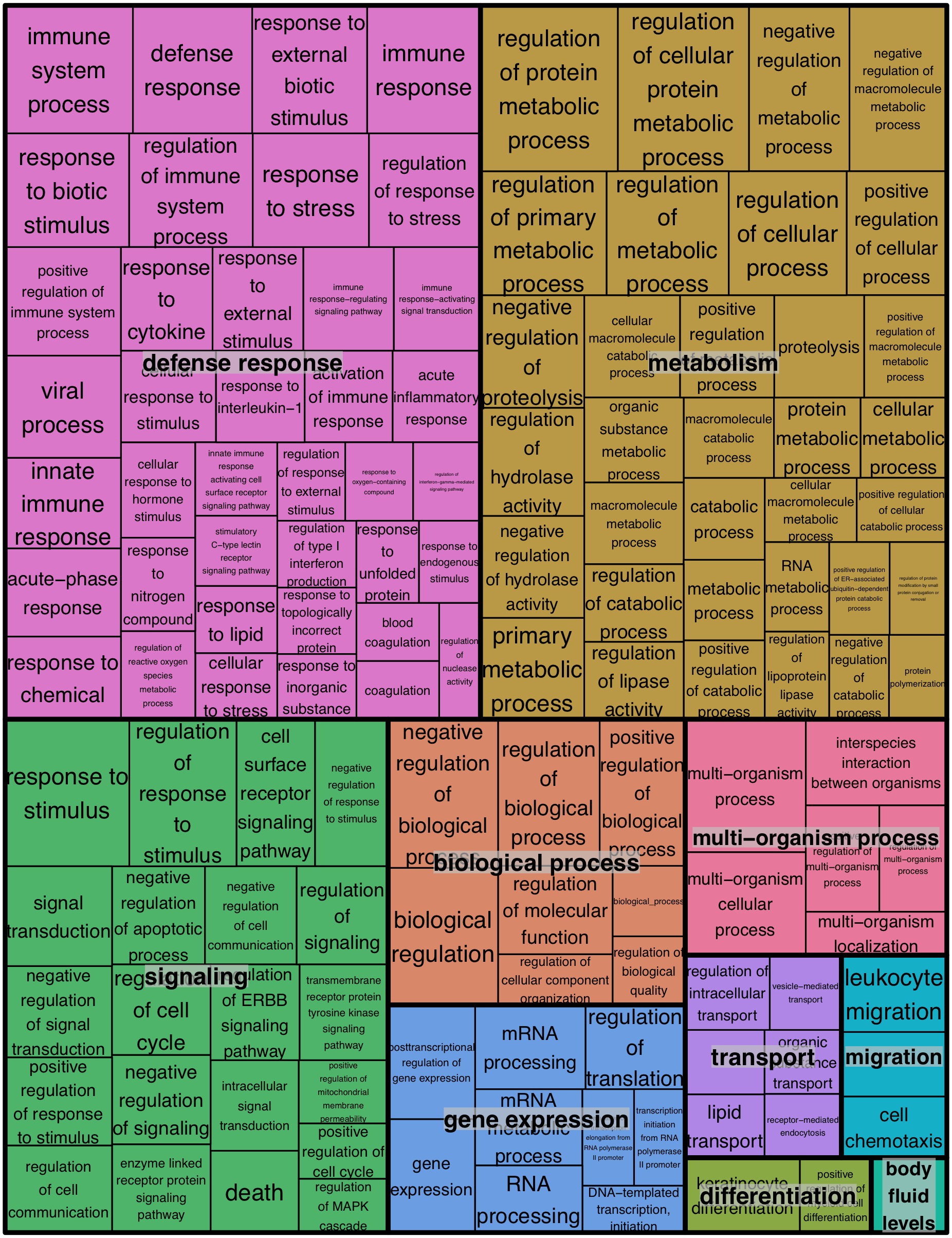 REVIGO treemap summarizing gene ontology biological process categories over-represented in WNS-affected tissues.
