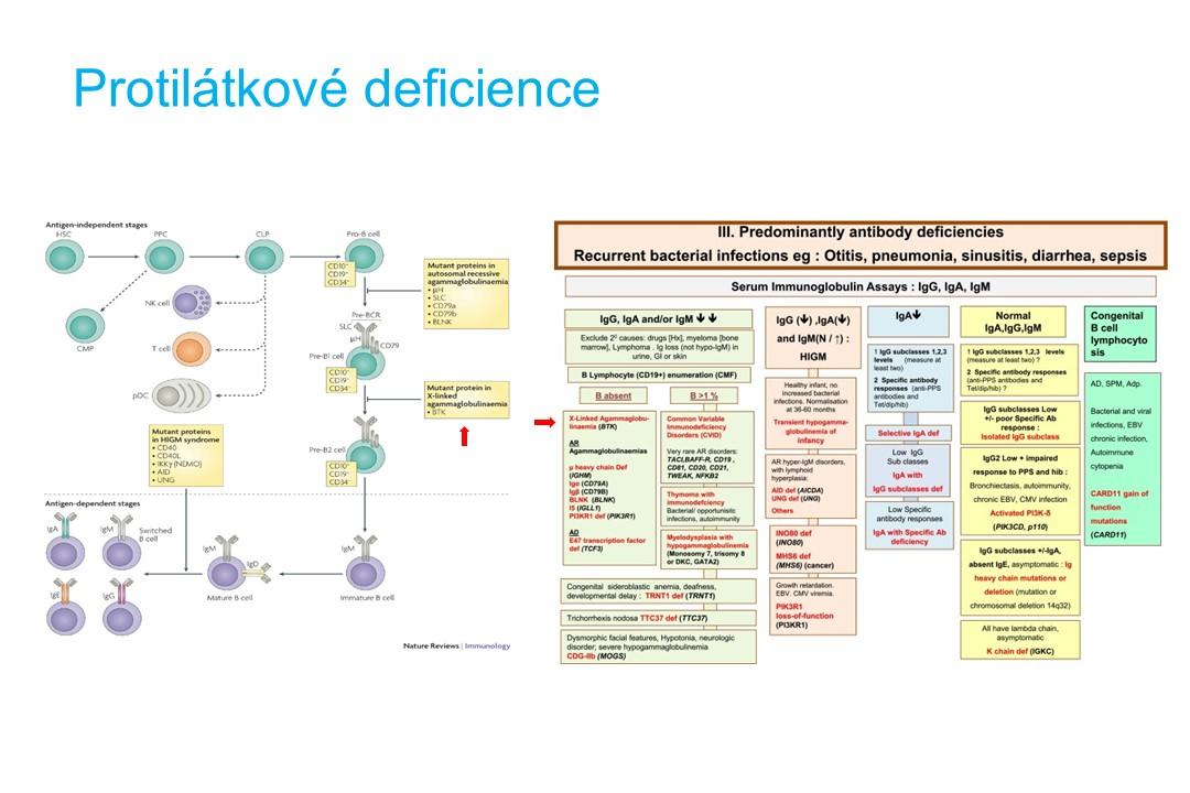 Imunodeficience - 11