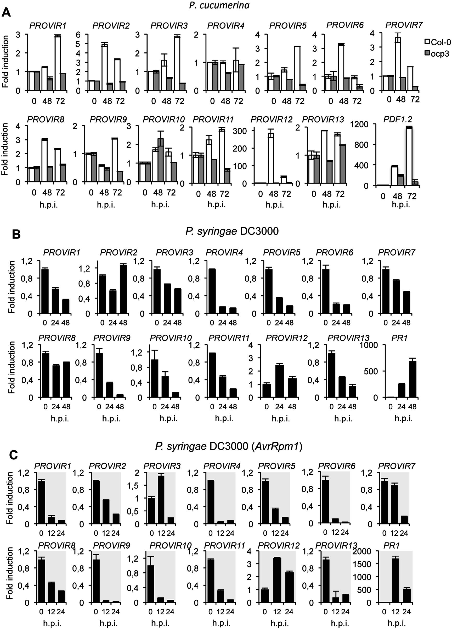 Expression patterns of <i>PROVIR</i> genes following pathogen inoculation.