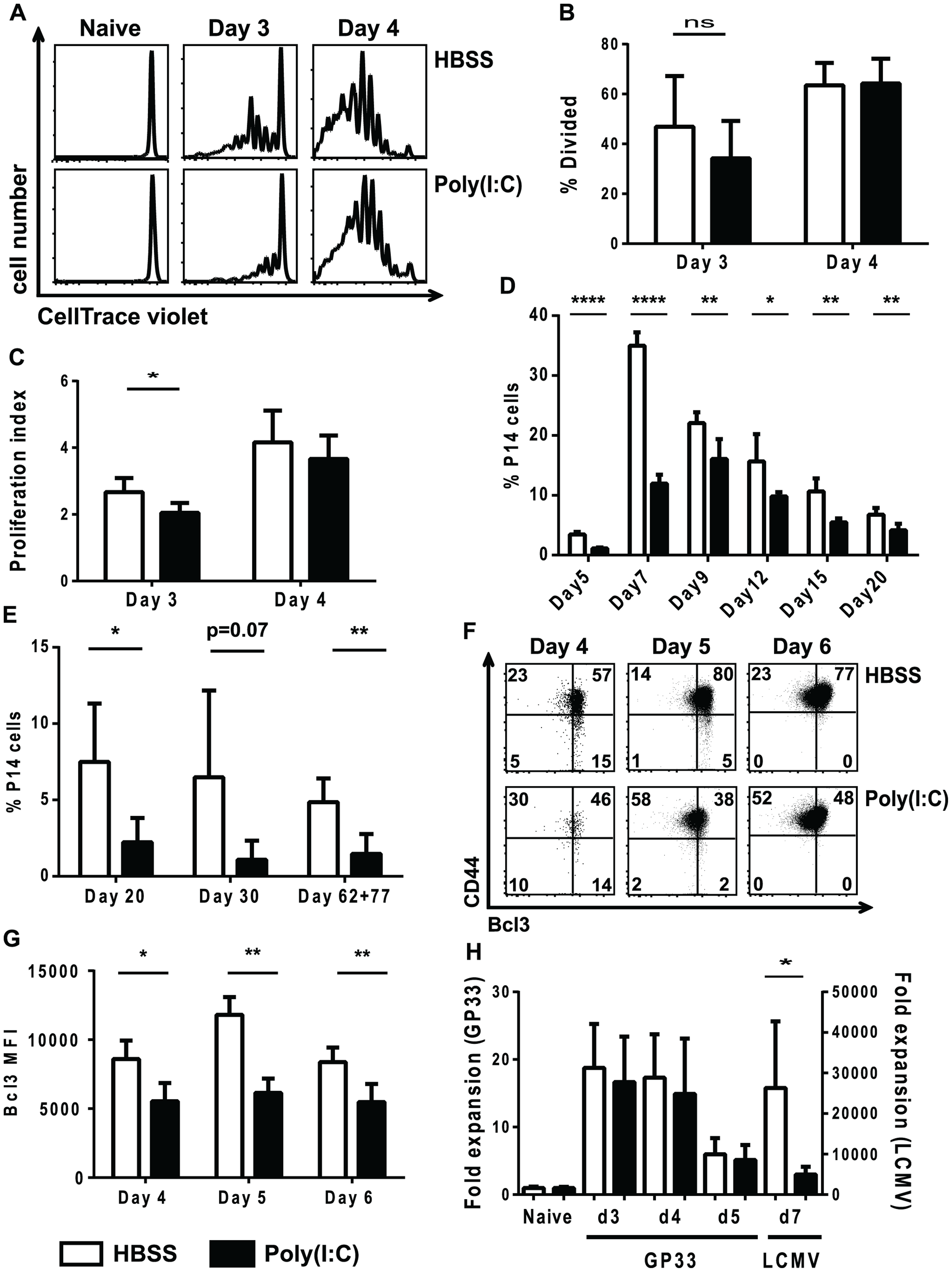 Poly(I∶C)-pretreated P14 CD8 T cells have a delay in division and reduced BCL3 expression.