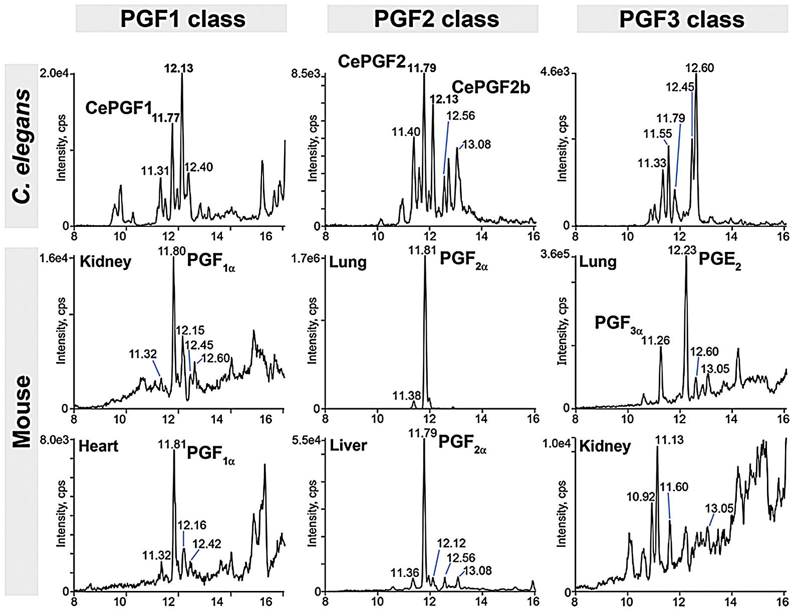 F-series prostaglandins in <i>C. elegans</i> and mouse tissues.