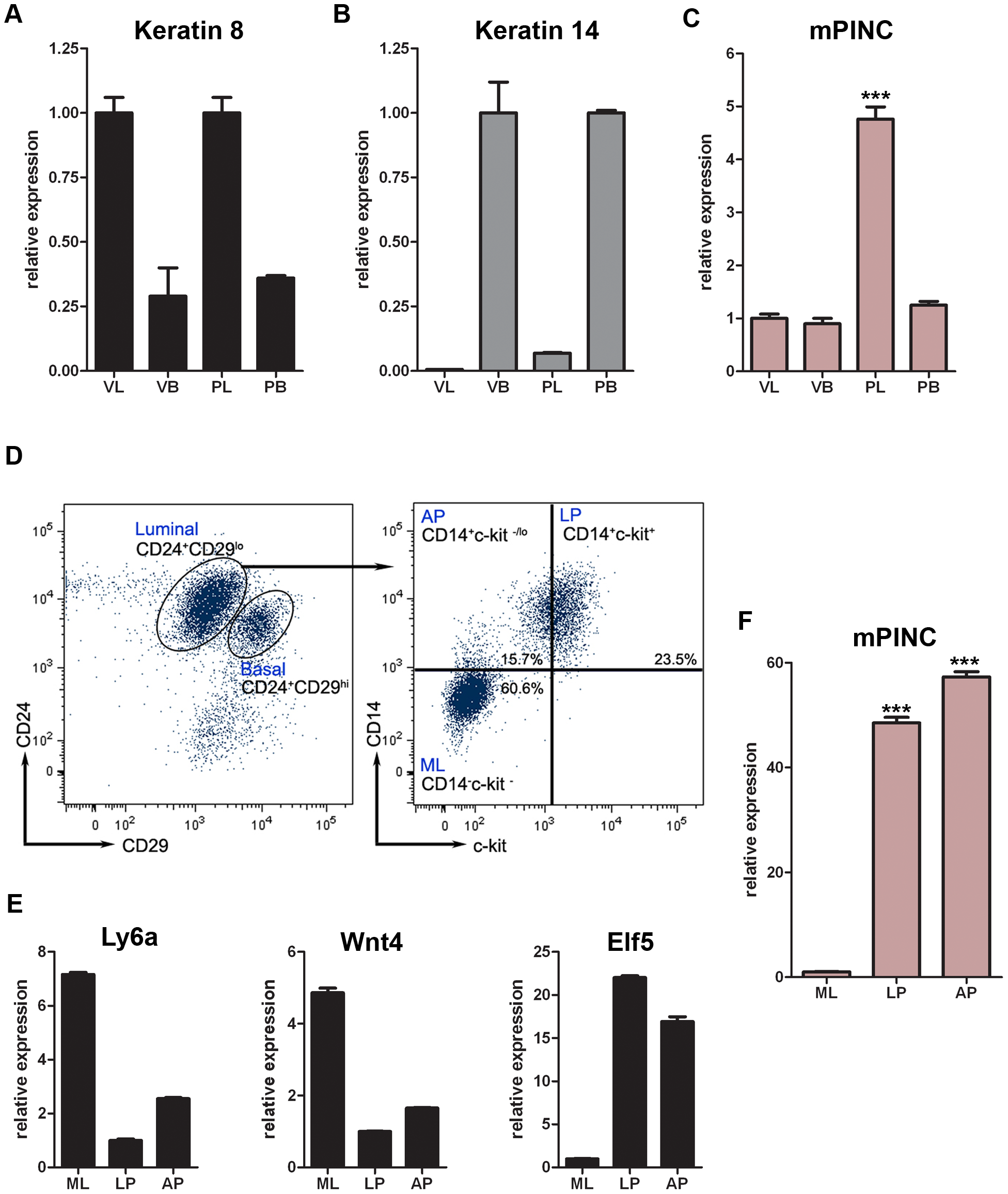 <i>mPINC</i> rises specifically in the luminal compartment during pregnancy and is enriched in luminal and alveolar progenitors of the mammary gland.