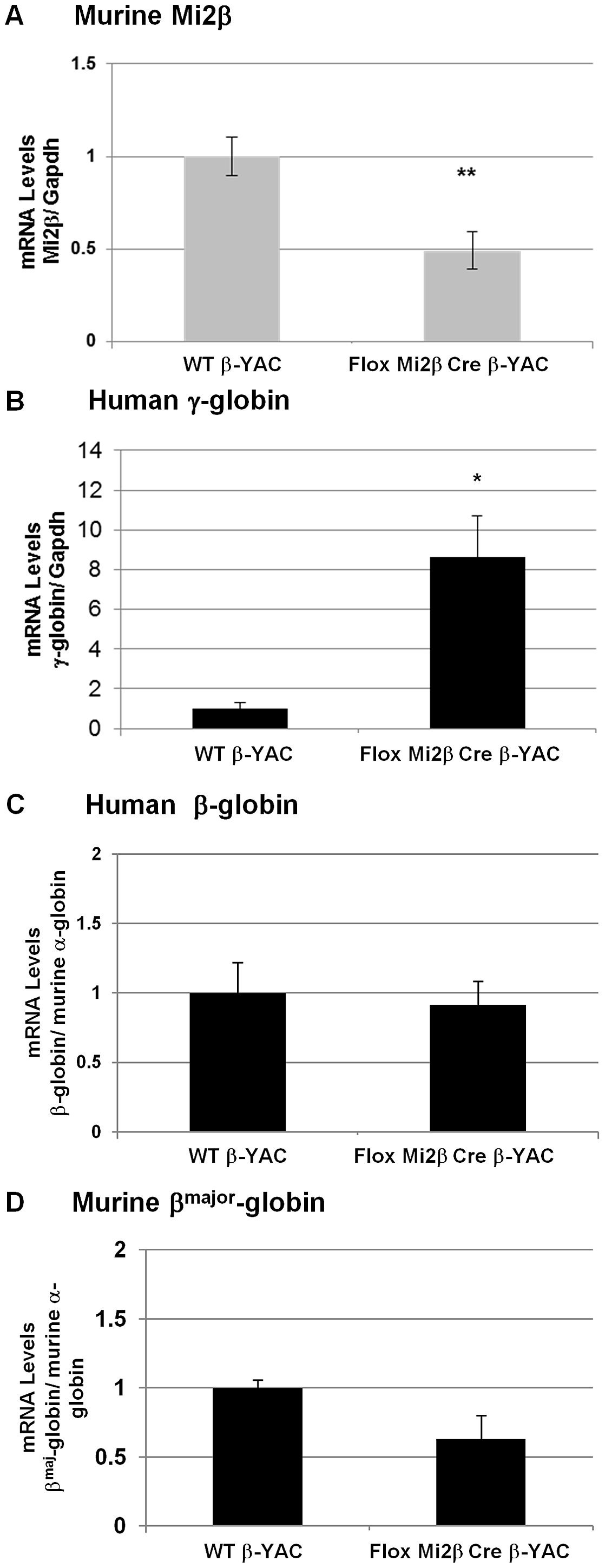 Expression of murine Mi2β and human and murine β-like globins in erythroid-specific conditional knockout Mi2β β-YAC transgenic mice.