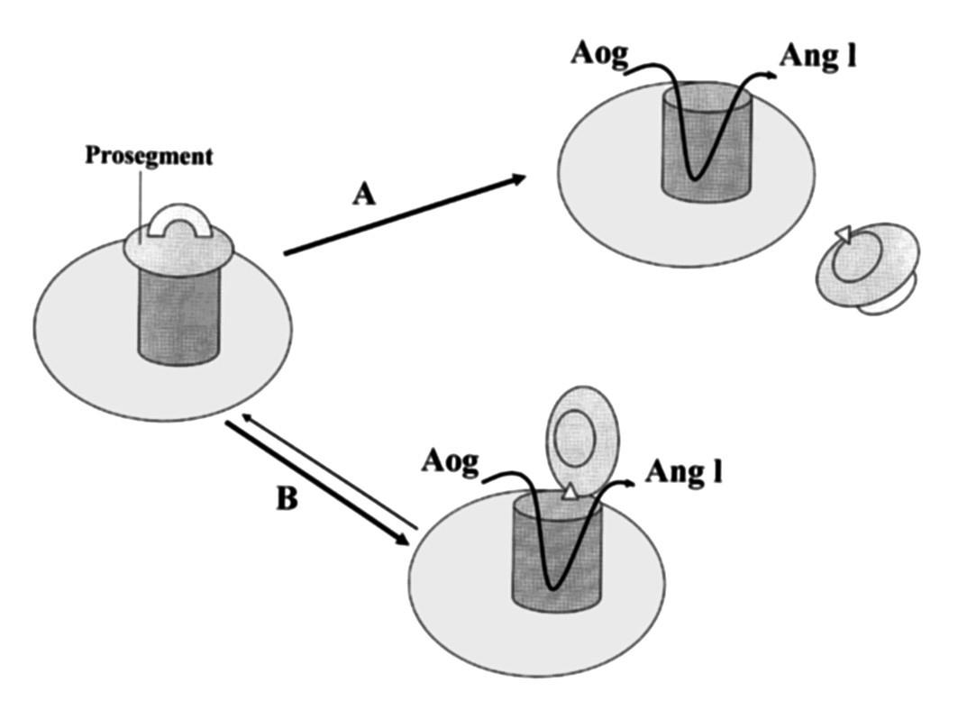 Schematické znázornění proteolytické a non-proteolytické aktivace proreninu (dle 21) A – proteolytická aktivace, B – non-proteolytická aktivace Aog – angiotenzinogen, Ang I – angiotenzin I
