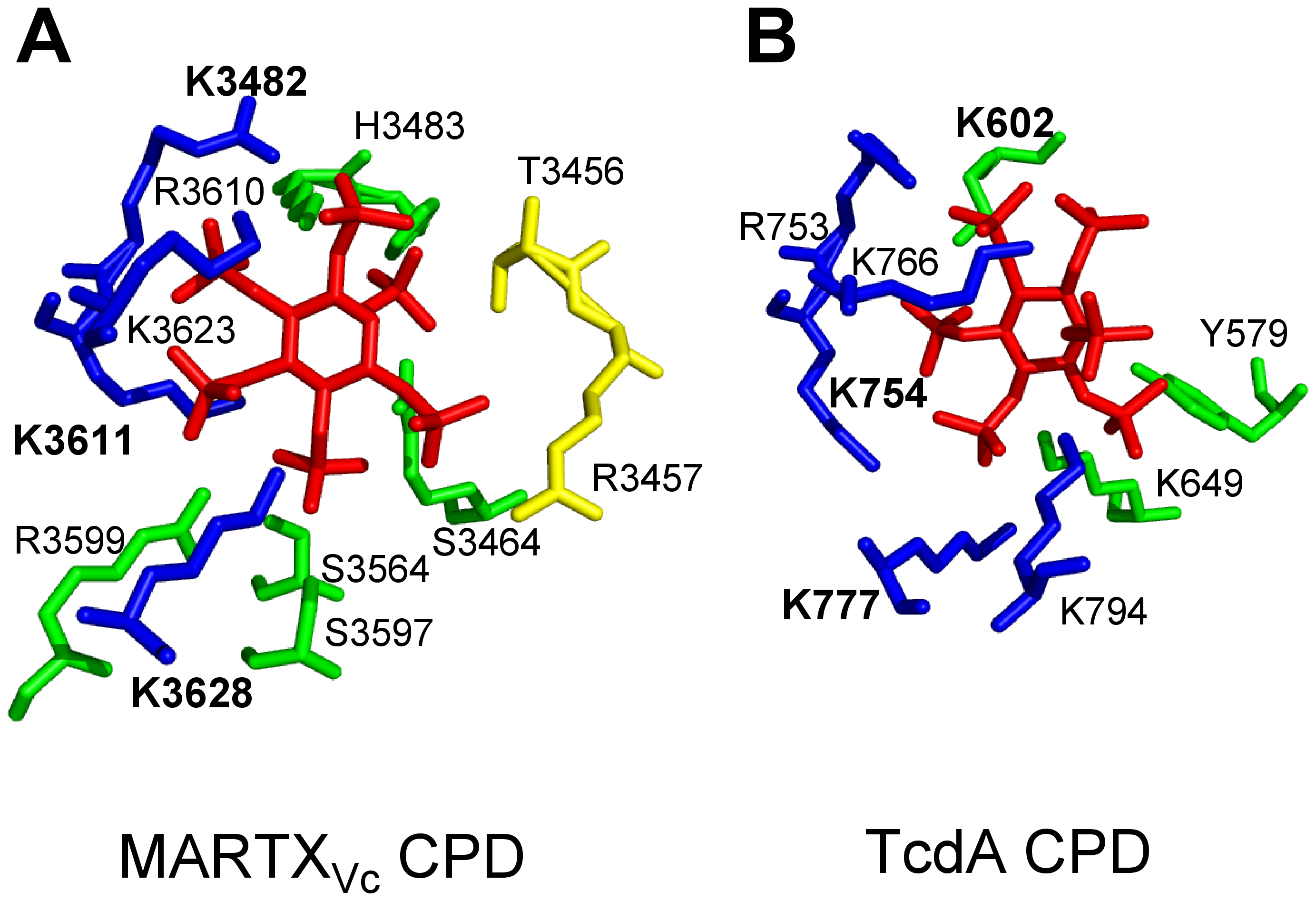 Side chain residues from CPD that contact InsP<sub>6</sub> in the structural models derived from crystal structures of MARTX<sub>Vc</sub> and TcdA CPD.