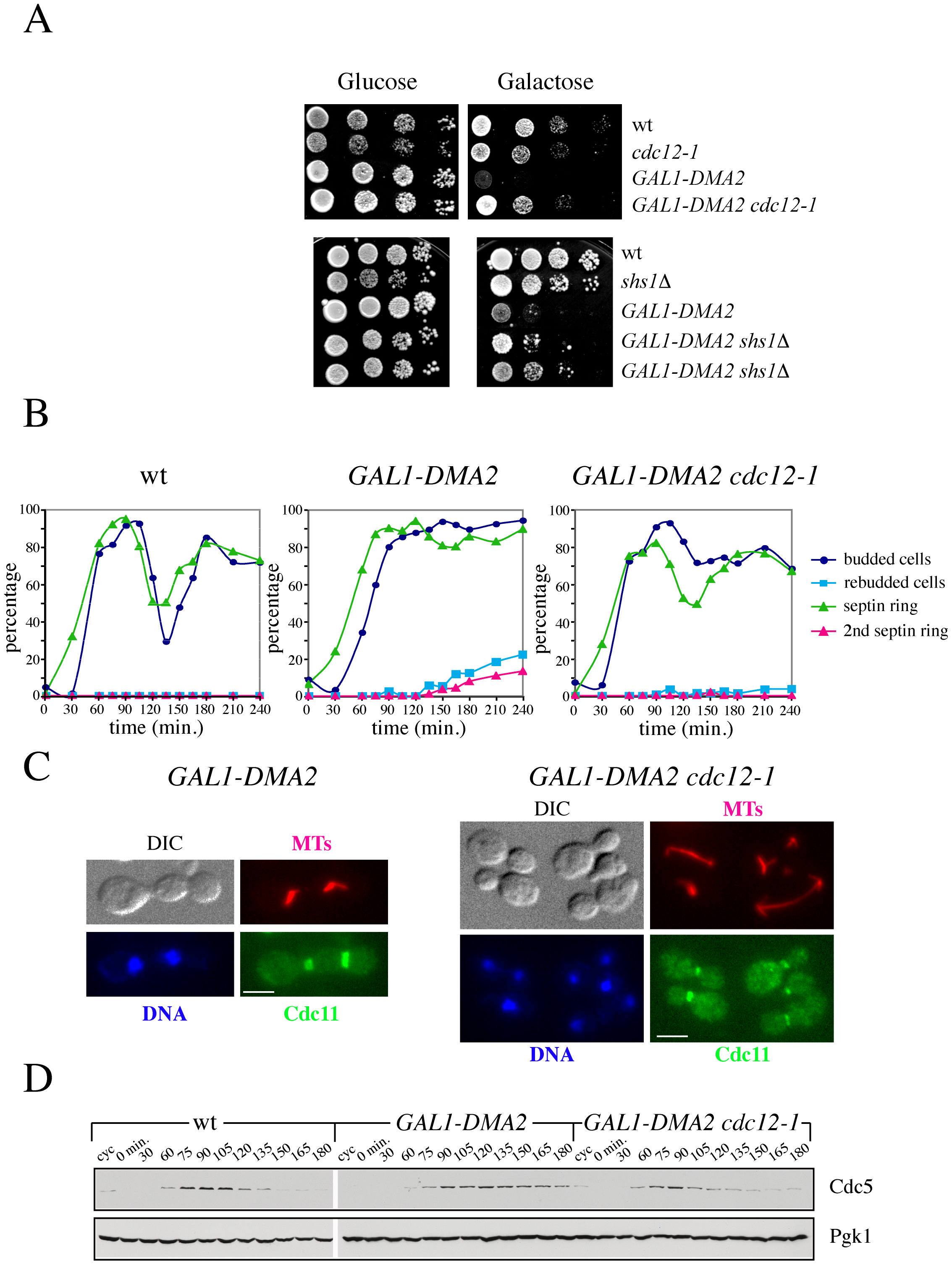 Destabilization of the septin ring rescues the lethality and cytokinesis defects caused by high levels of Dma2.