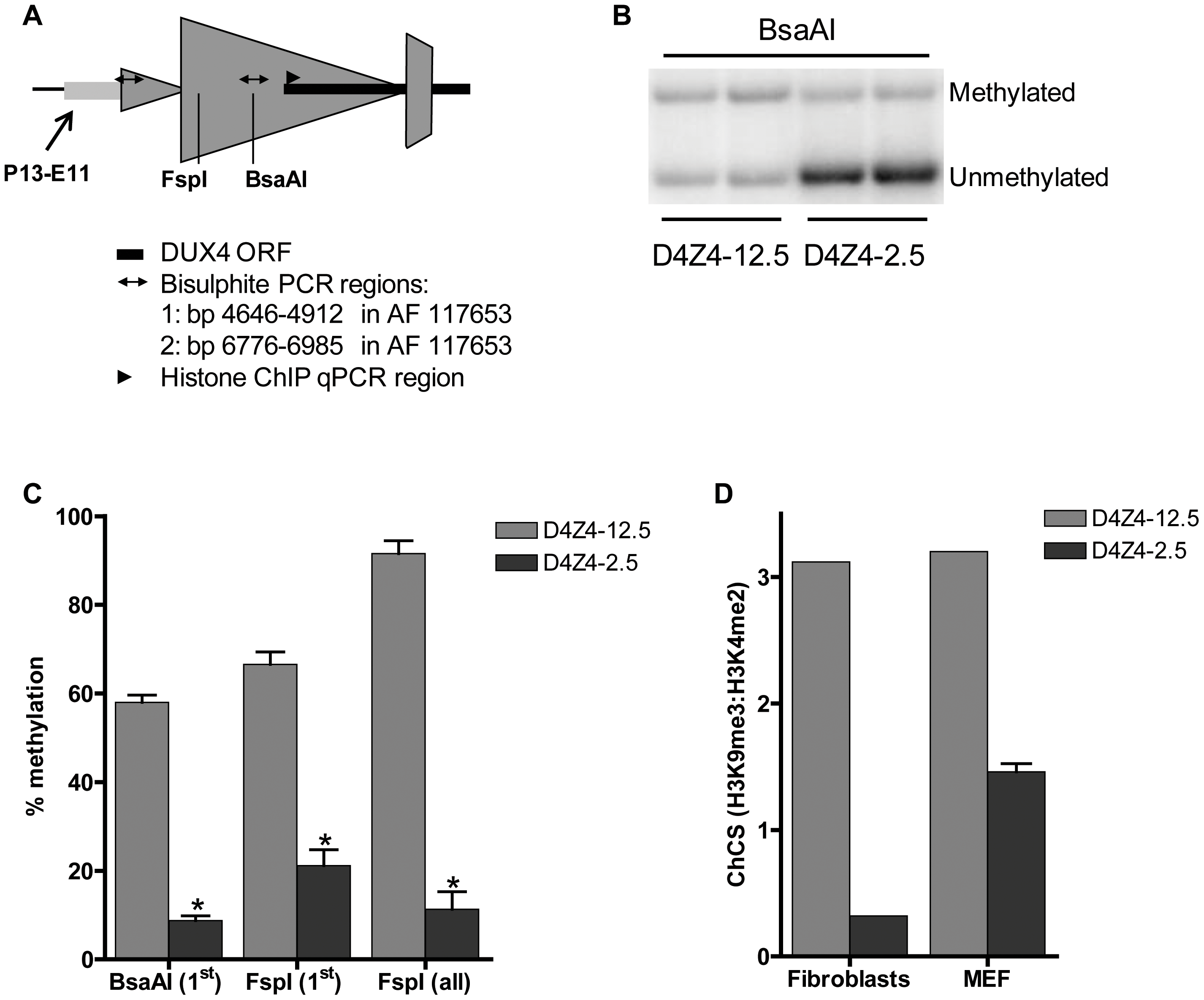 Epigenetic structure of D4Z4 in D4Z4-2.5 and D4Z4-12.5 mice.