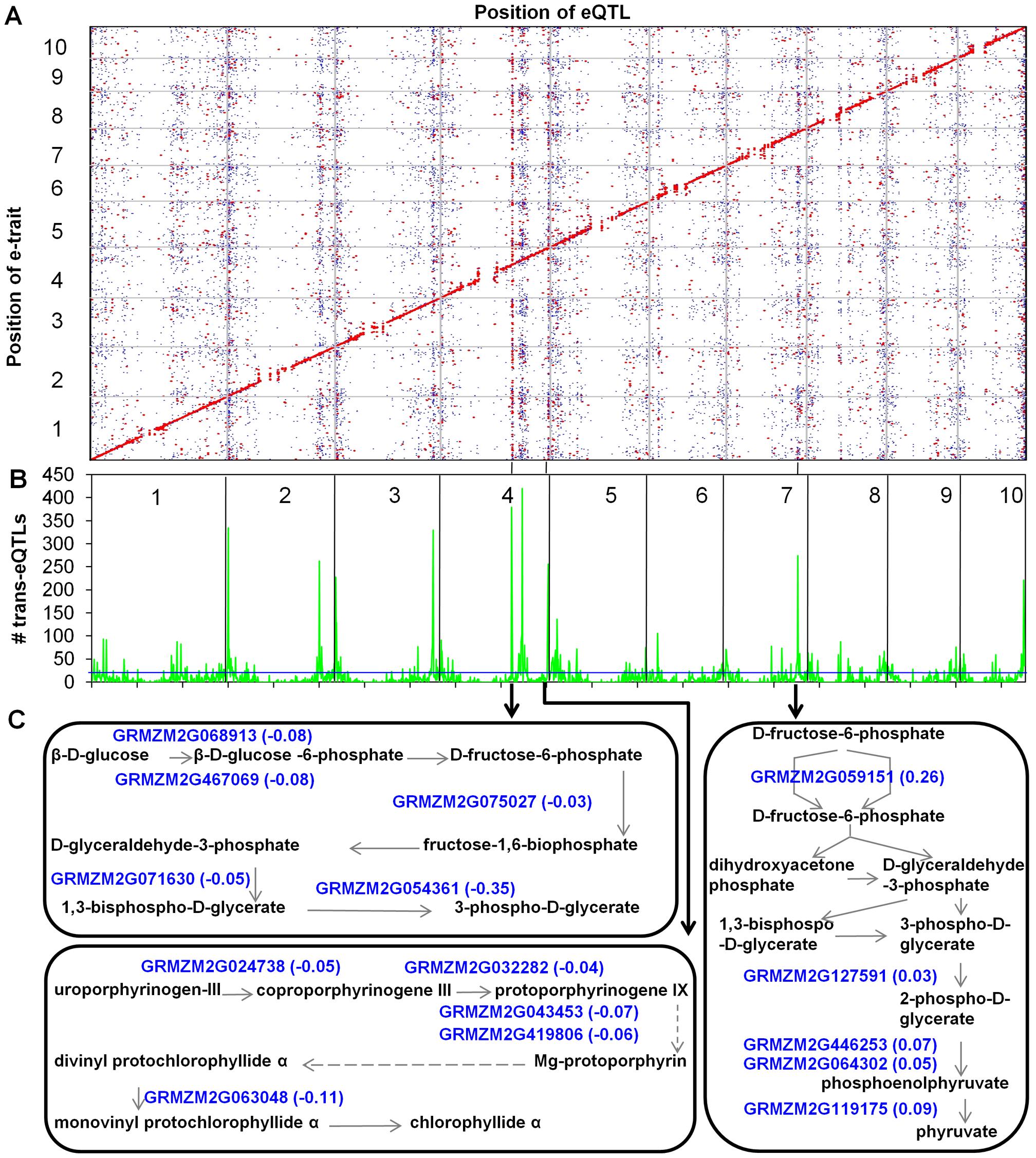 eQTL mapping, <i>trans-</i>eQTL hotspots, and pathways regulated by three <i>trans-</i>eQTL hotspots.