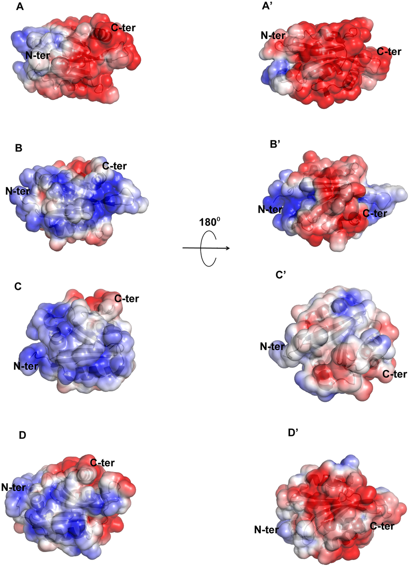 Molecular surface charge distribution of EhCoactosin and homologous proteins.