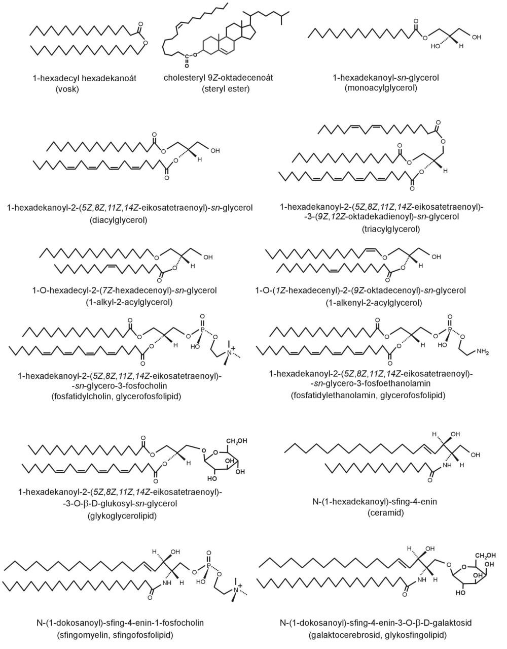 Strukturní vzorce lipidových tříd