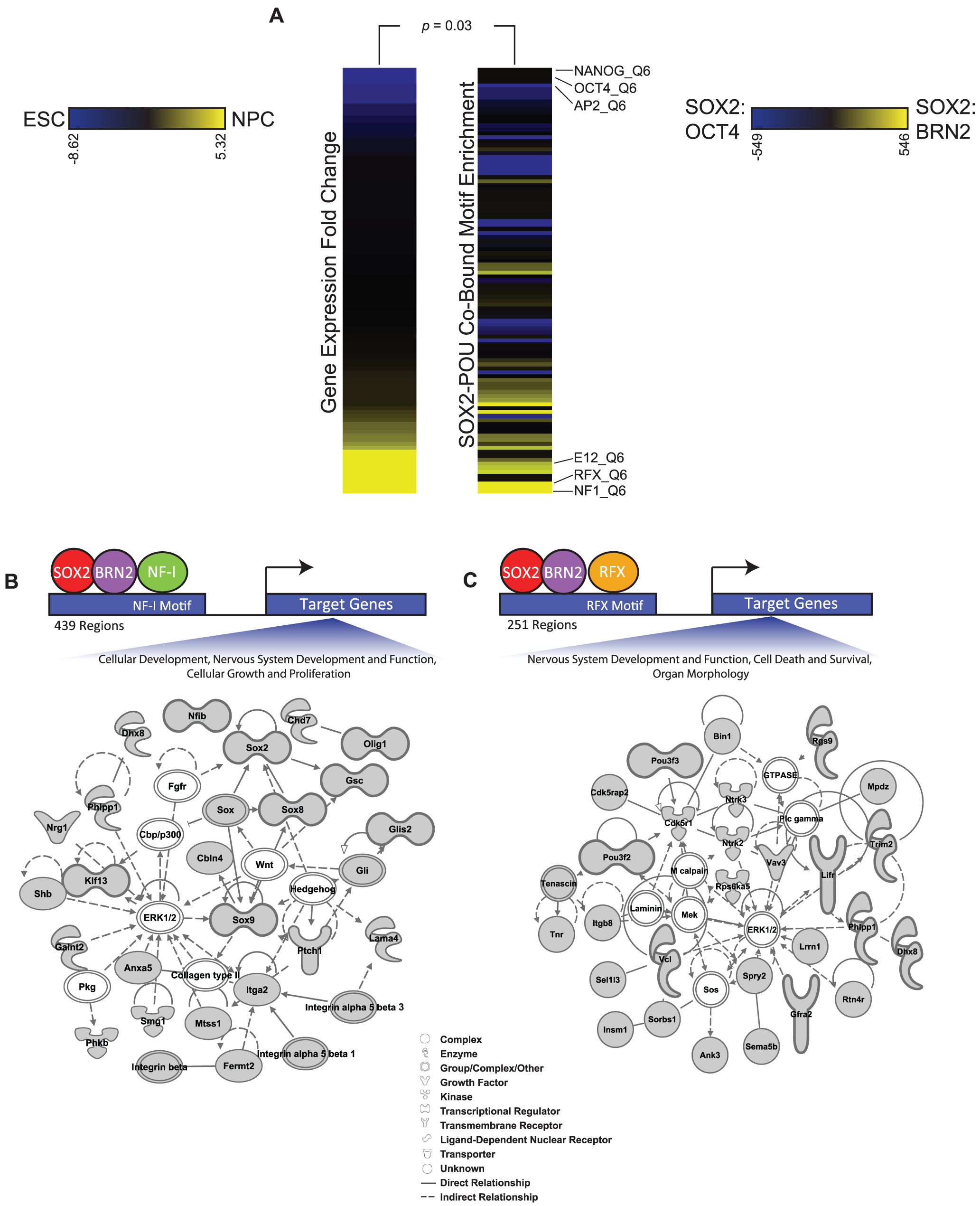 Additional transcription factor motifs are enriched in SOX2-POU-bound regions.