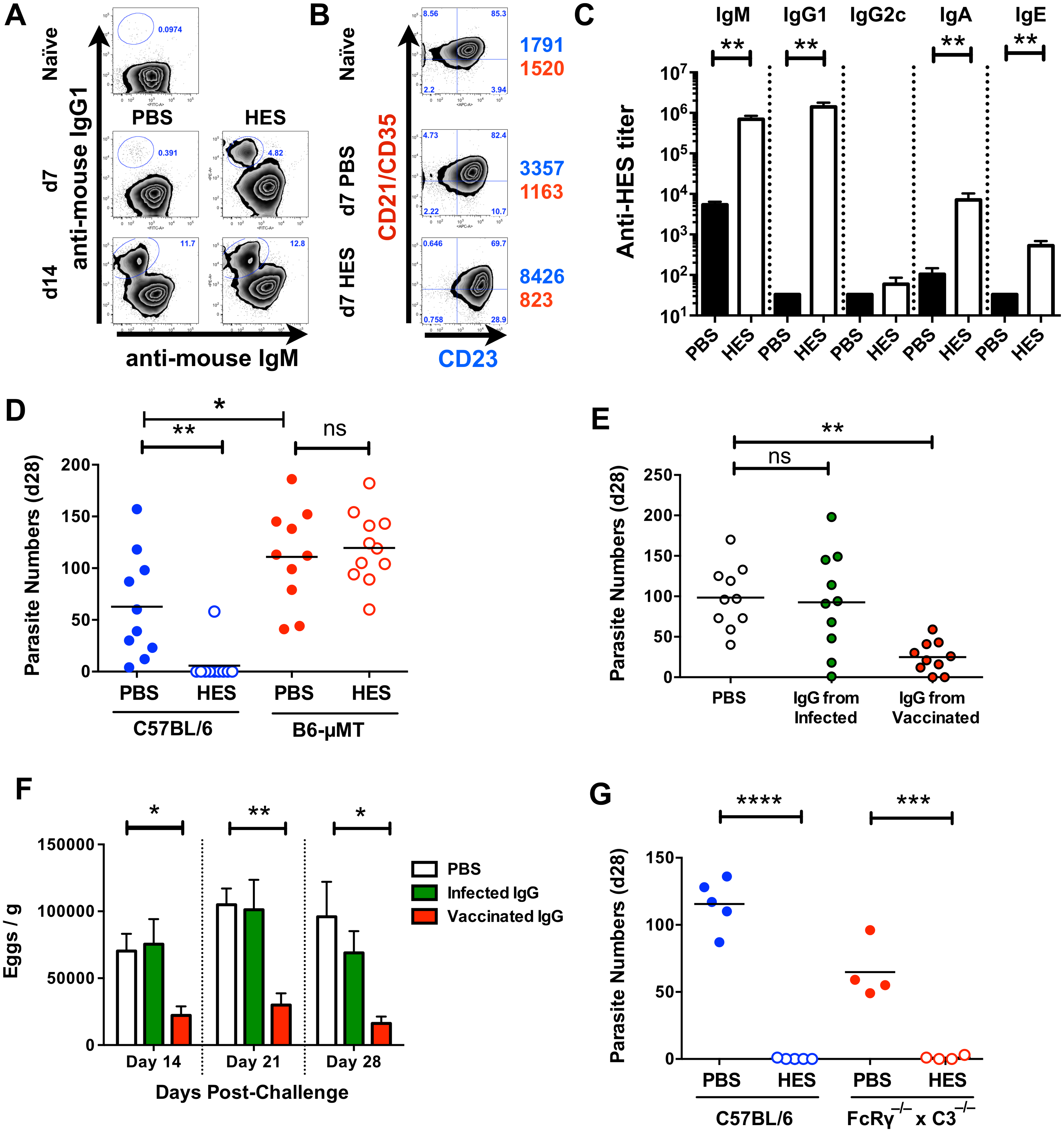 Immunity is dependent on cognate B cells and partially transferrable by antibody.