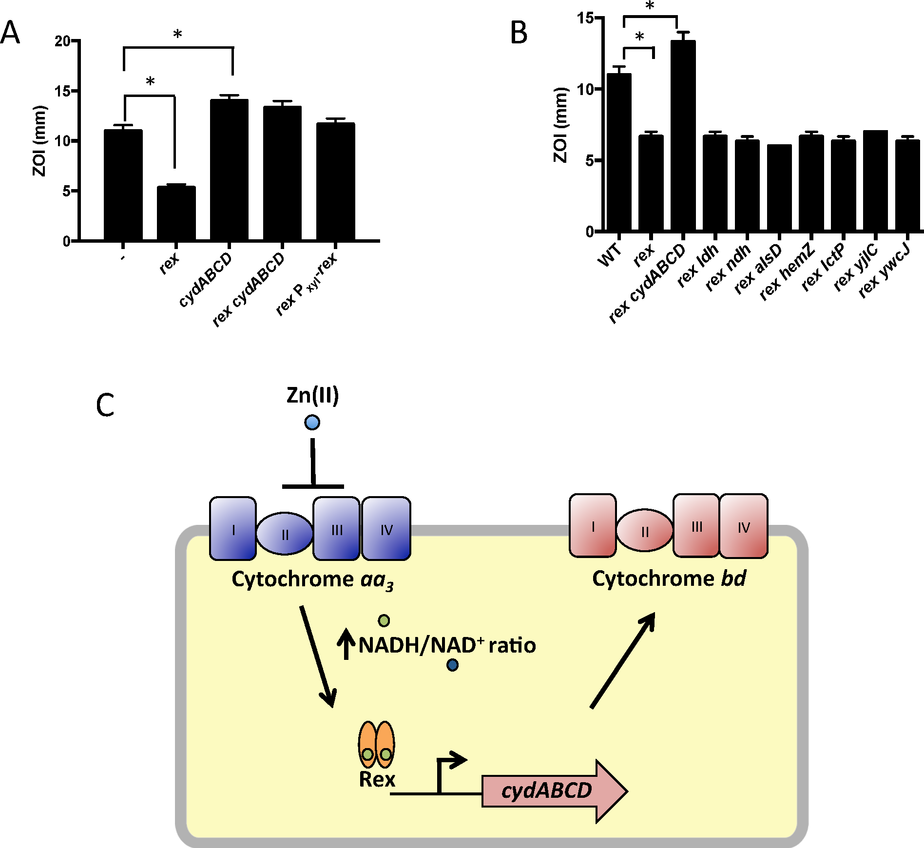 Derepression of the alternative cytochrome <i>bd</i> oxidase contributes to Zn(II) resistance.