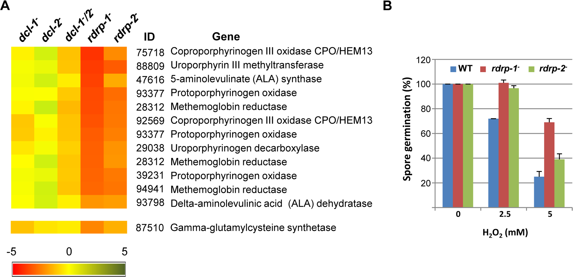 Differential regulation of genes involved in heme B biosynthesis or metabolism and oxidative stress response in <i>rdrp-</i> mutants.