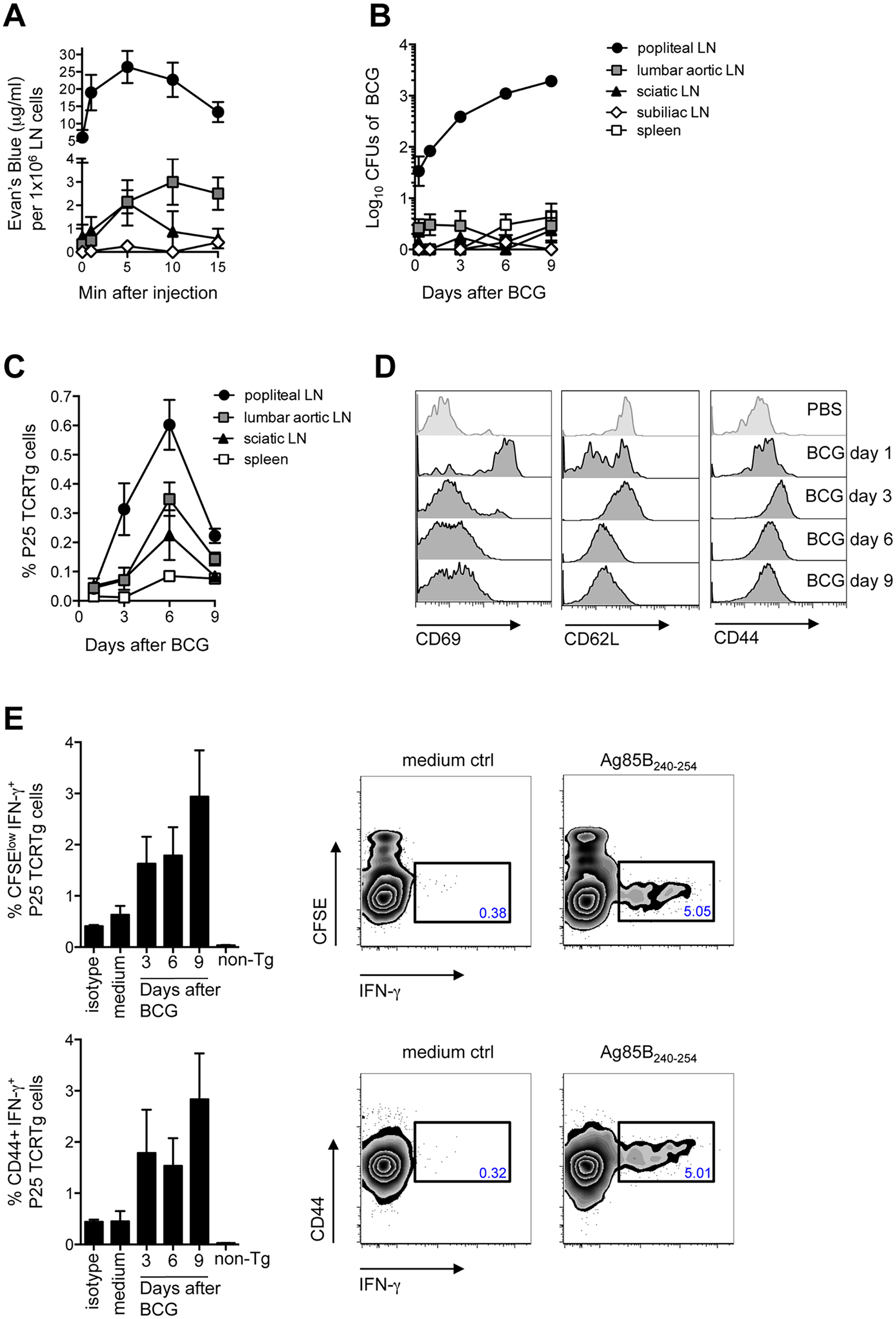 Detection of BCG in the DLN correlates with the priming of P25 TCRTg cells.