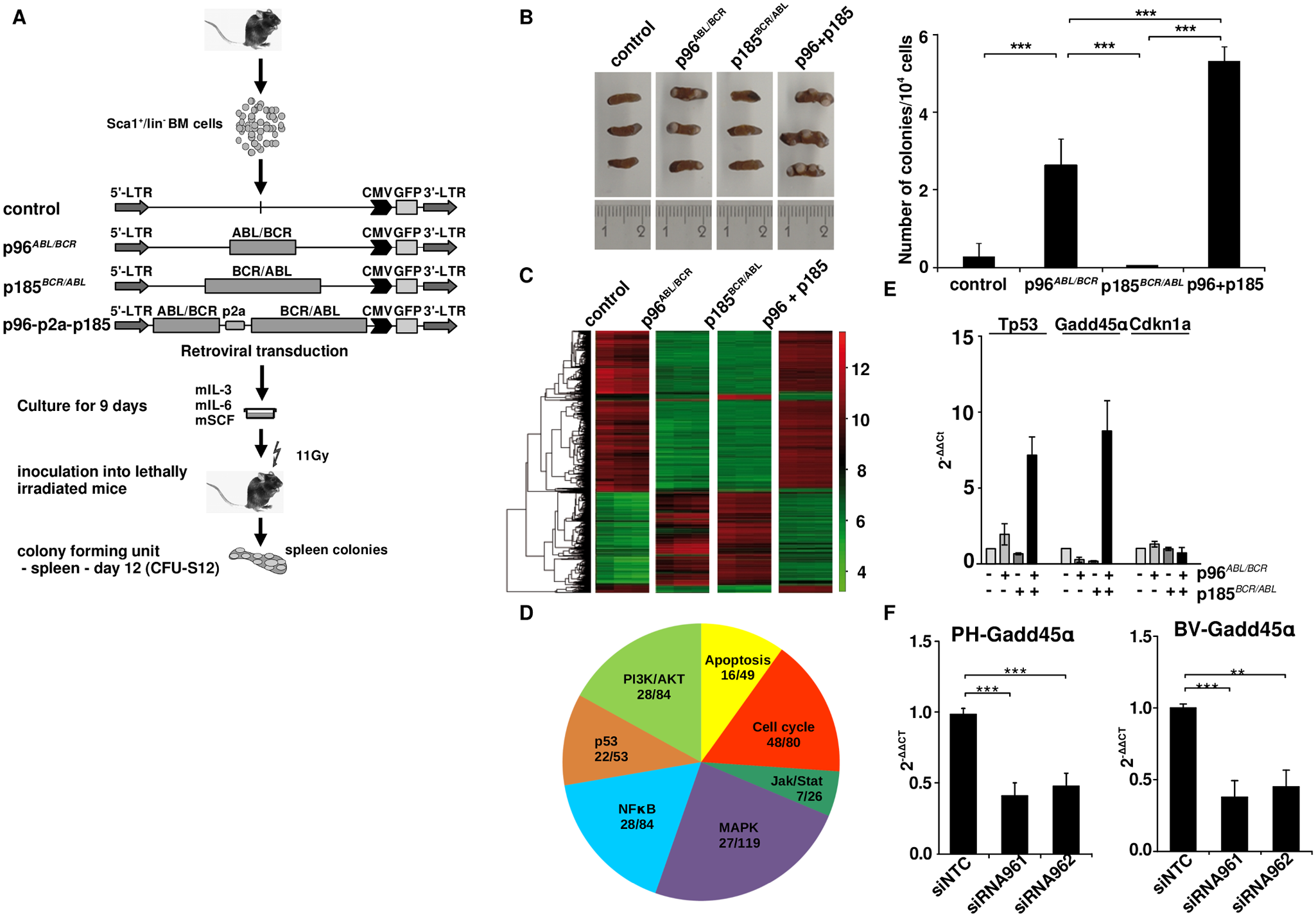 Stem cell colonogenic potential of t(9;22) fusion proteins.