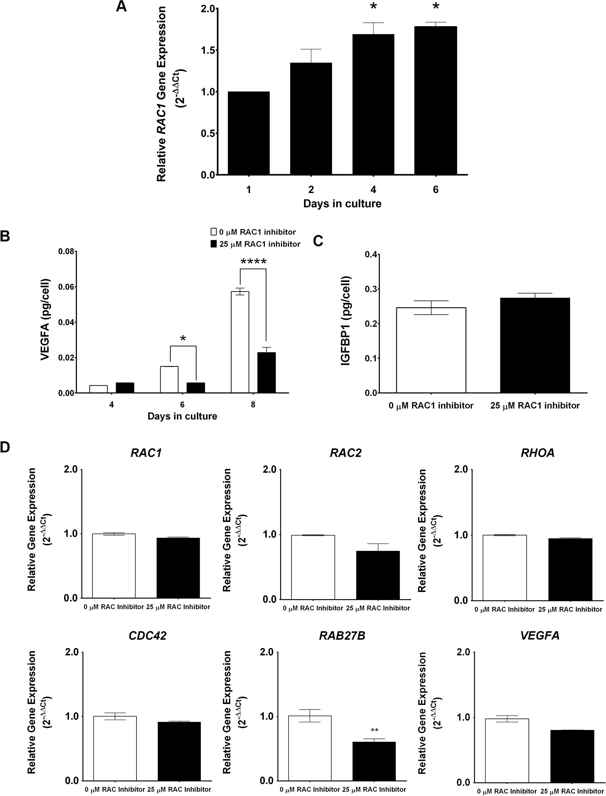 RAC1 regulates secretory function of human endometrial stromal cells.