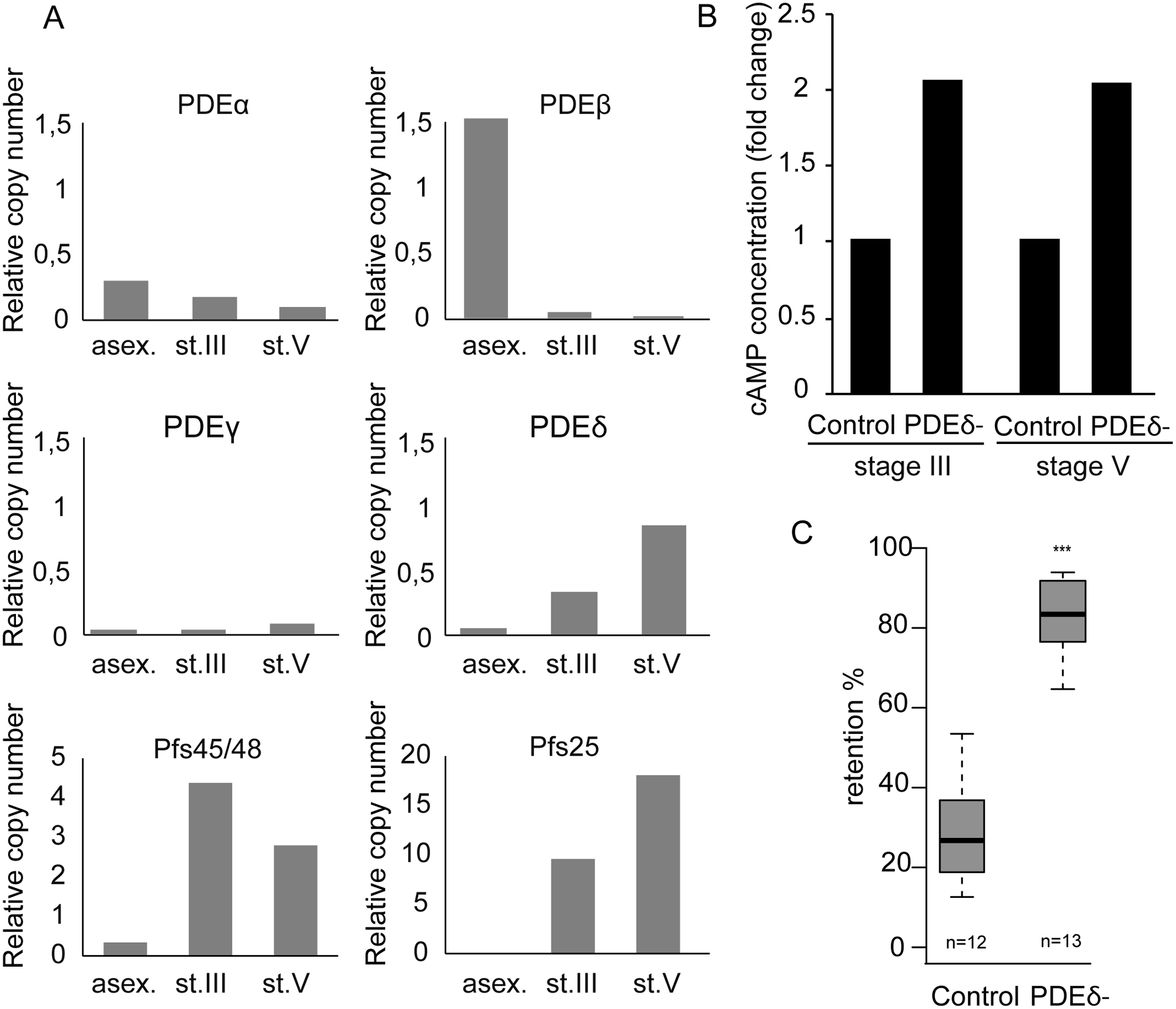 cAMP degradation by phosphodiesterases regulates GIE mechanical properties.