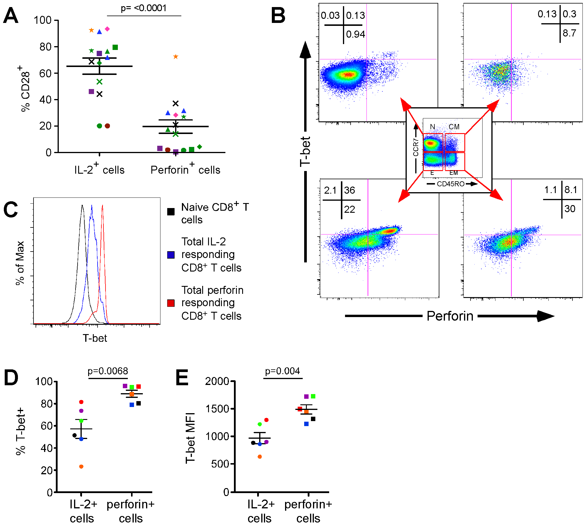 T-bet is preferentially expressed in CD8<sup>+</sup> T cells that rapidly upregulate perforin and promotes an effector phenotype.
