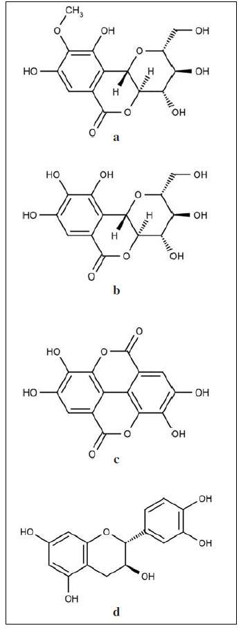 Strukturní vzorce obsahových látek z extraktů rodu Bergenia: a – bergenin (C-glykosid-4-O-methyl kyseliny gallové), b – O-demetylovaný derivát bergeninu norbergenin, c –kyselina ellagová, d – katechin<sup>5, 11, 18, 58)</sup>