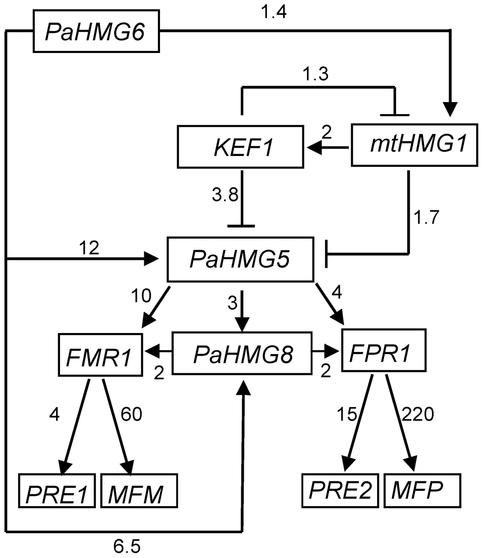 Genetic network of HMG-box genes that regulate mating in <i>P. anserina</i>.