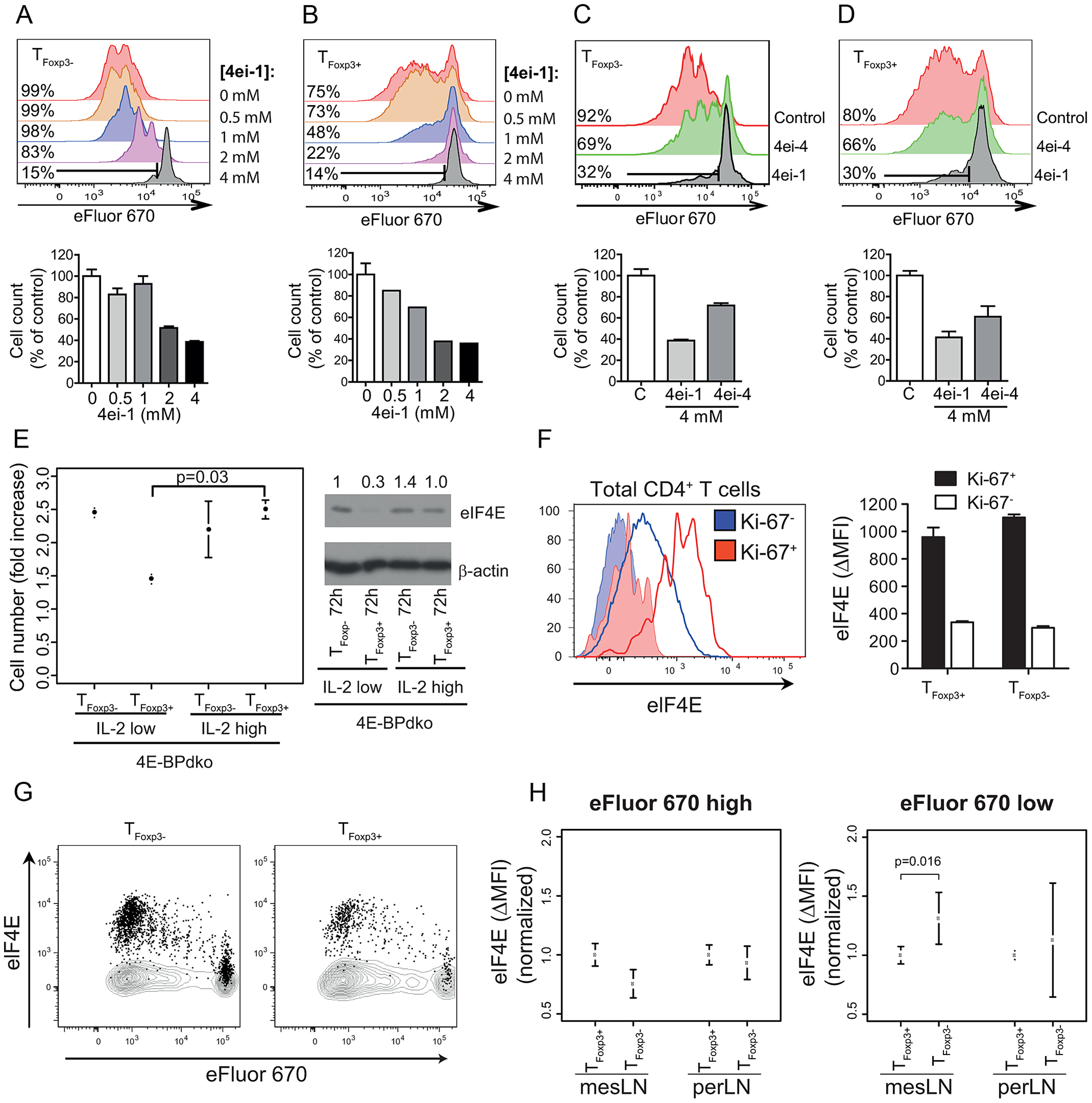 eIF4E controls proliferation in T cell subsets.