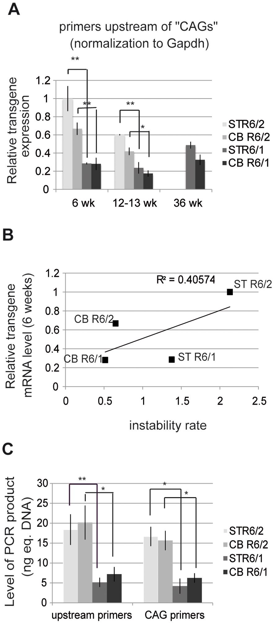 HD transgene expression in R6/1 and R6/2 striatum and cerebellum.