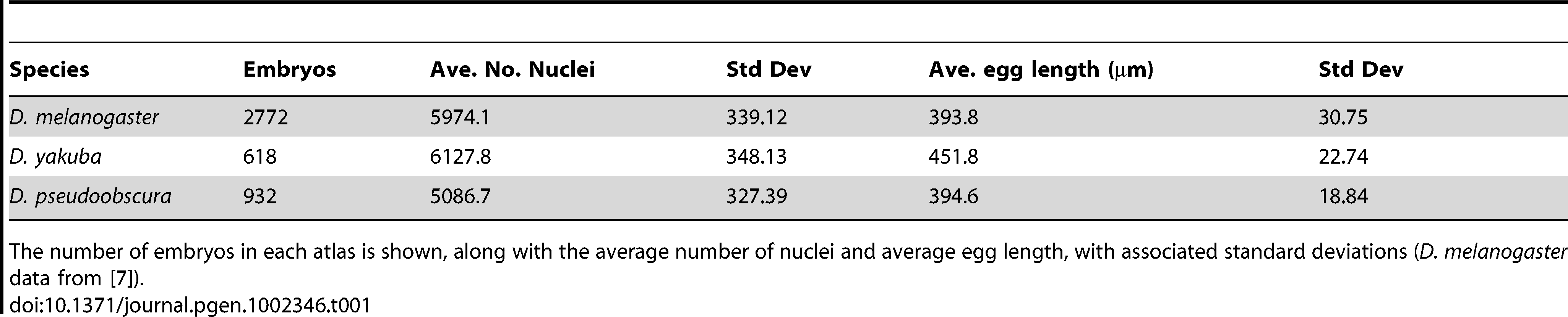 Egg length and nuclear number varies in blastoderm embryos of <i>D. melanogaster</i>, <i>D. yakuba</i>, and <i>D. pseudoobscura</i>.