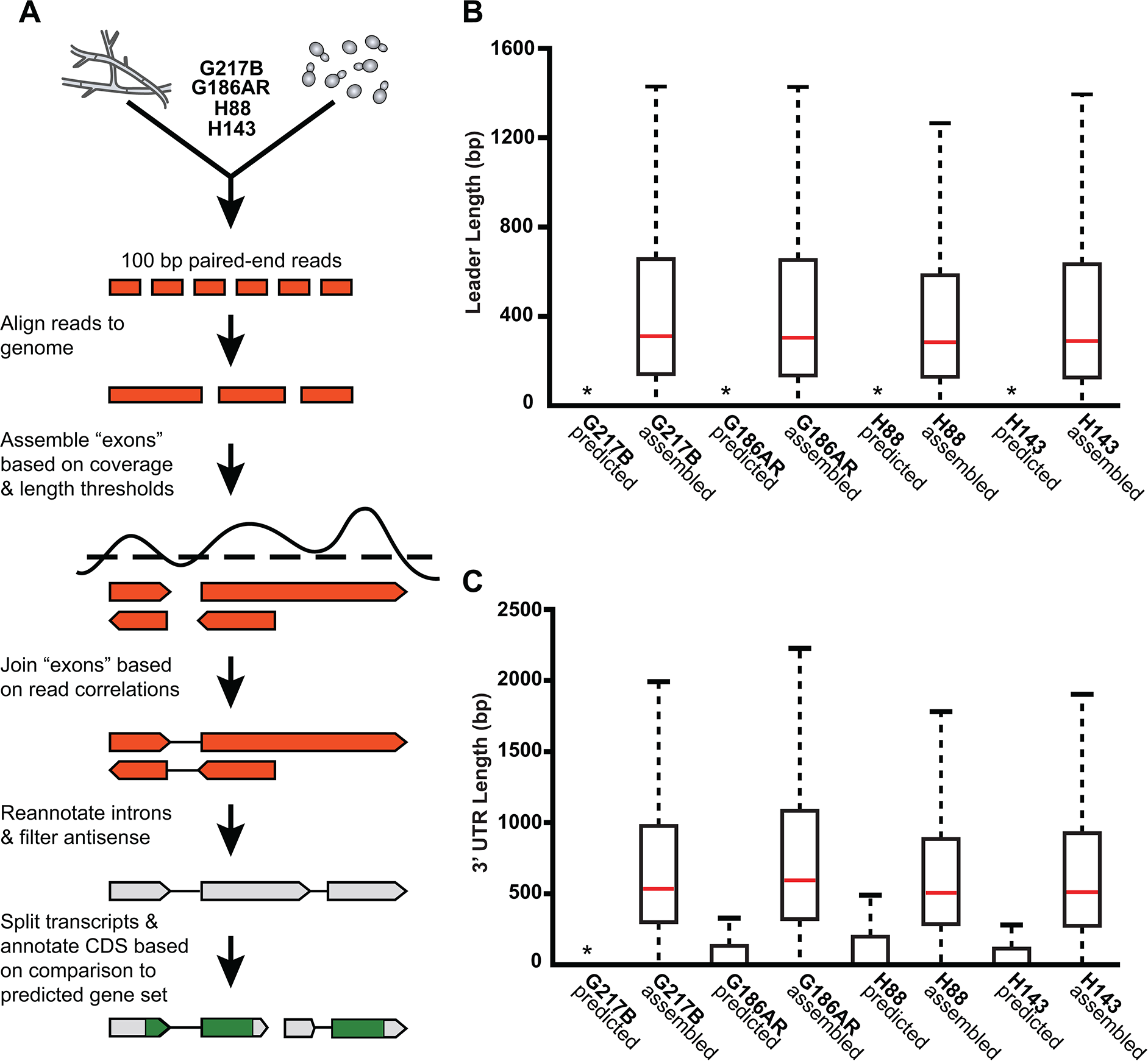 <i>De novo Histoplasma</i> transcriptome reconstruction augments transcript models.