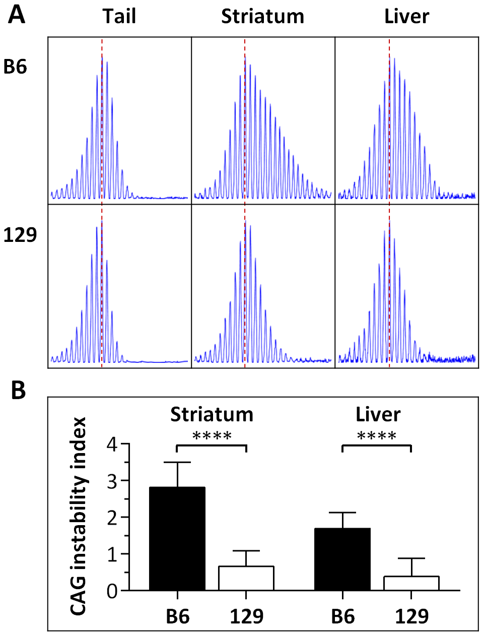 Somatic <i>HTT</i> CAG instability differs between B6.<i>Hdh<sup>Q111</sup></i><sup>/+</sup> and 129.<i>Hdh<sup>Q111</sup></i><sup>/+</sup> mice.