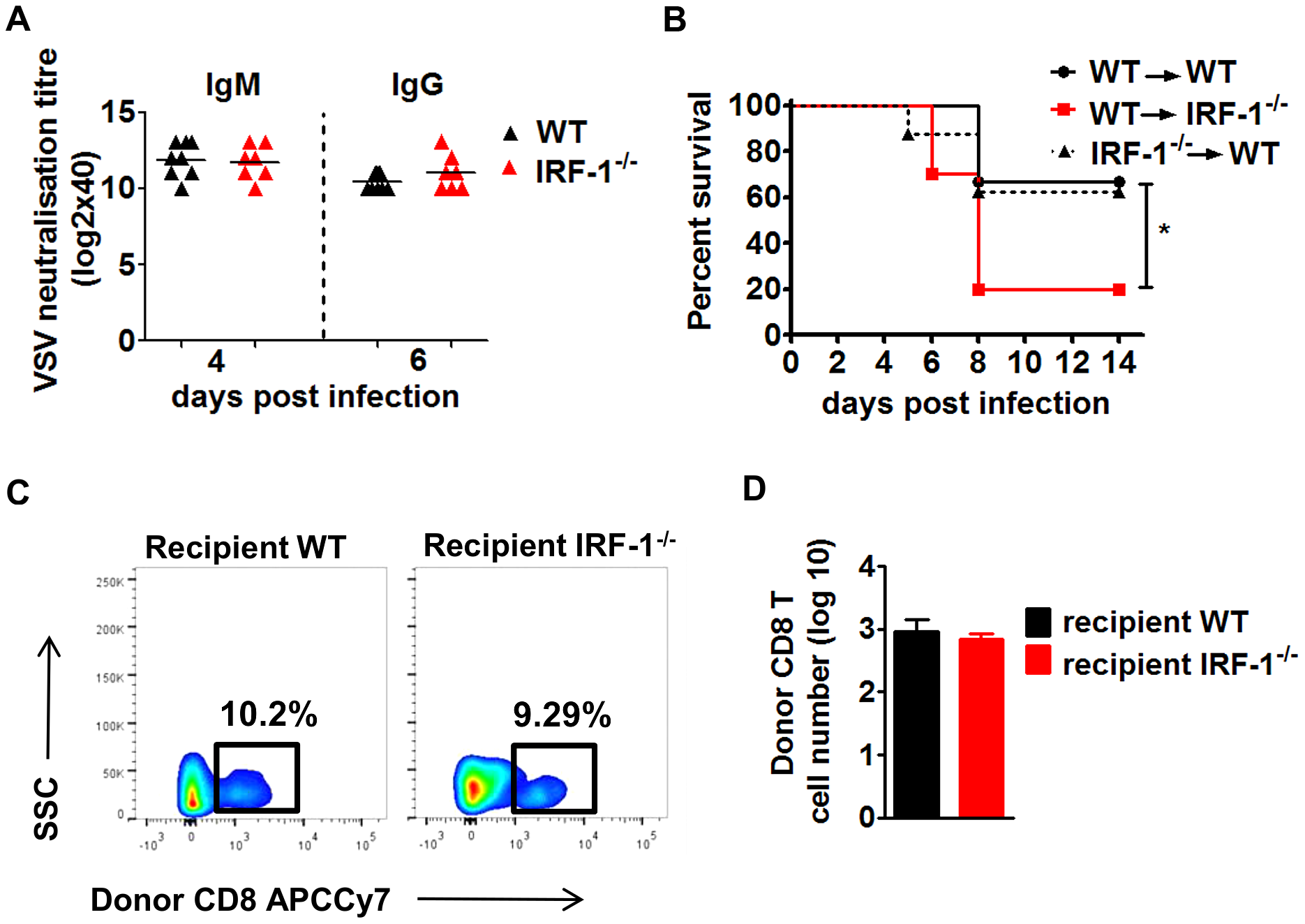 The anti-viral effects of IRF-1 are neither driven by the adaptive immune responses nor by the hematopoietic cells.